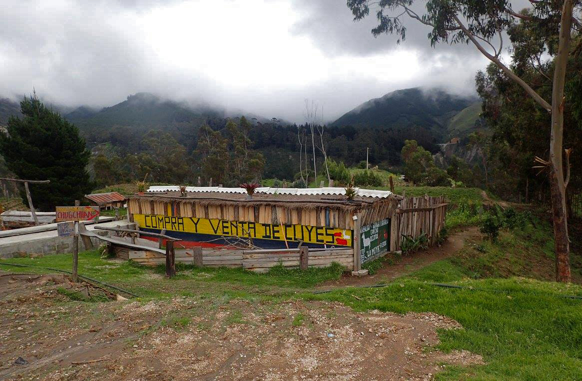 Guinea pig farmjpg