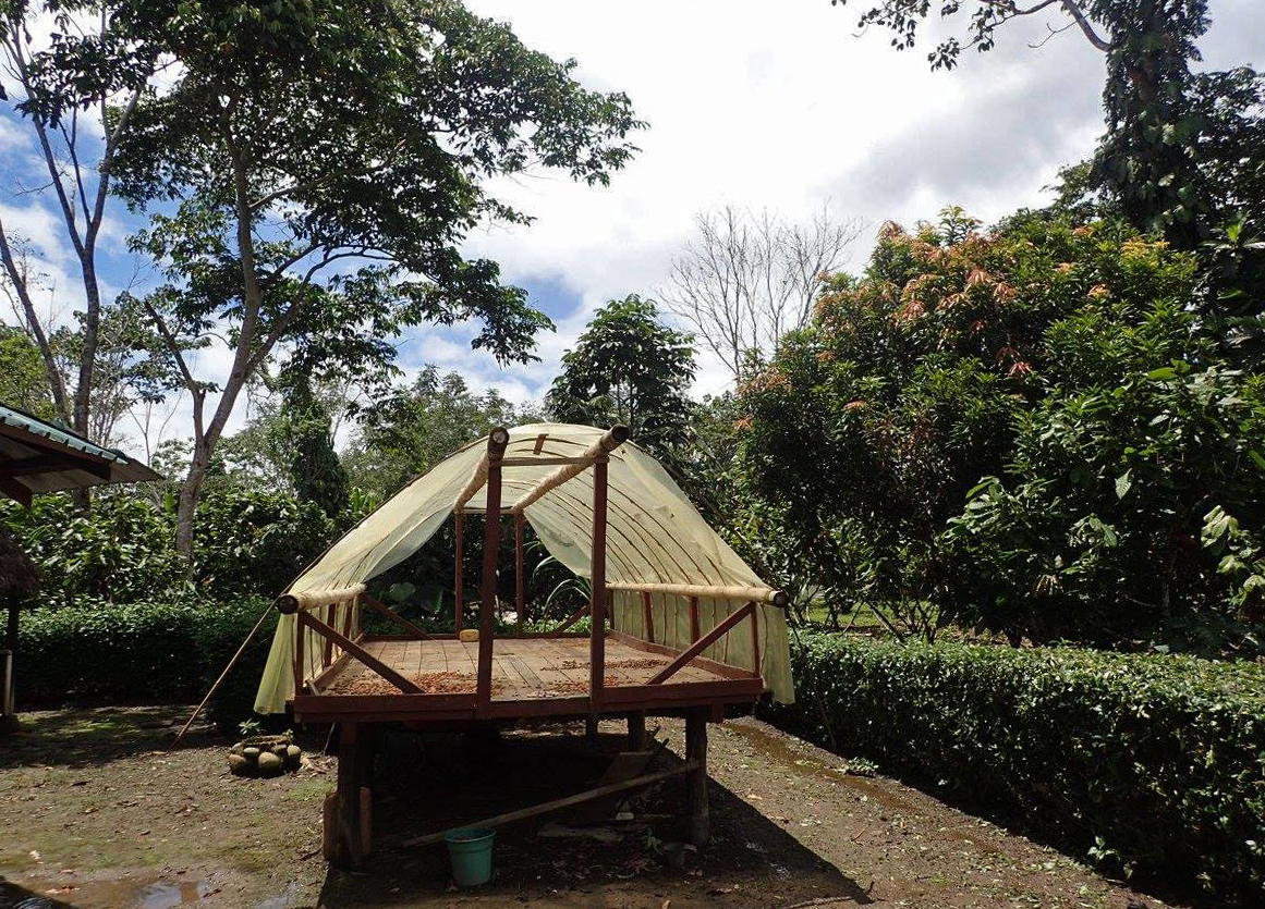 cacao farm 2.jpg