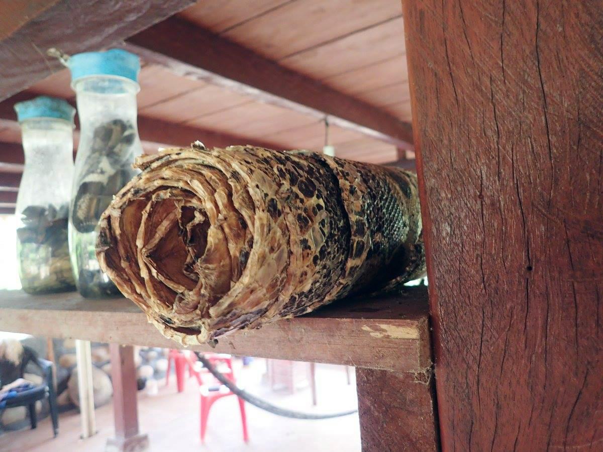 drying snake skin.jpg