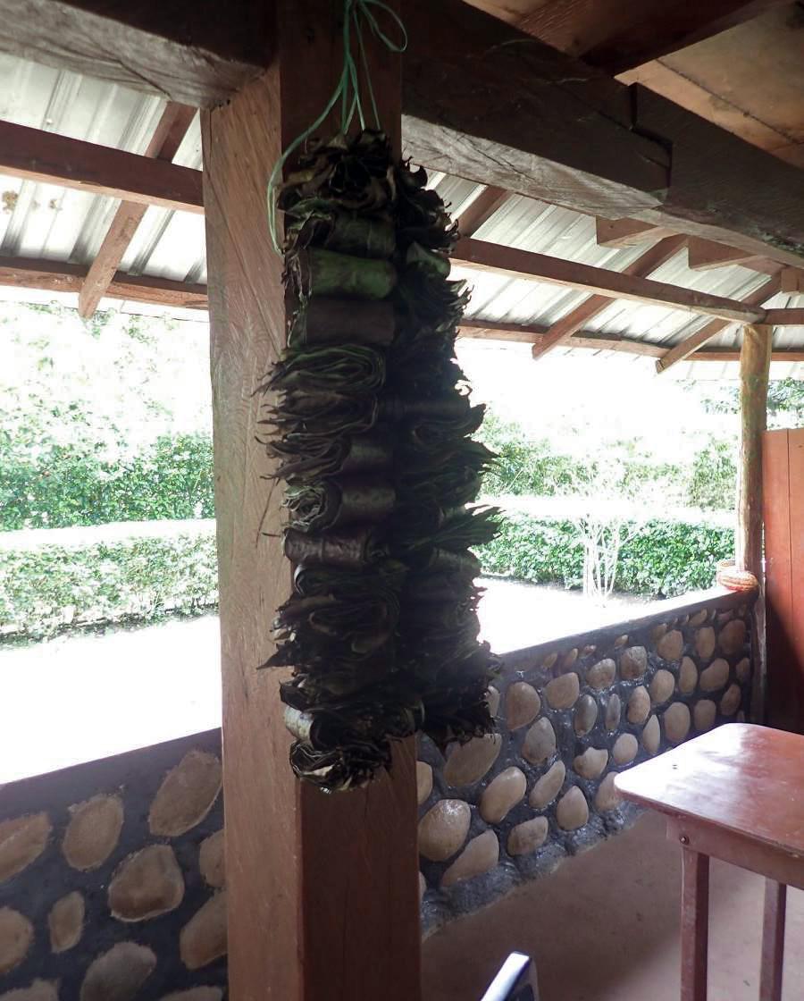 Guayasco leaves.jpg