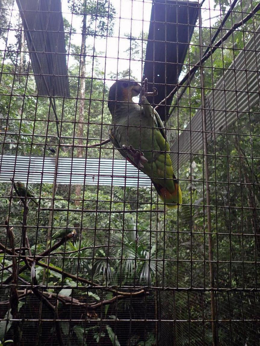 injured bird.jpg