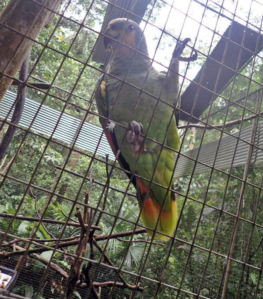 injured parrot.jpg