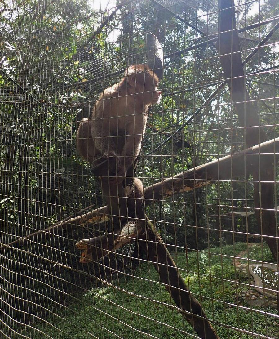 rescued monkey.jpg