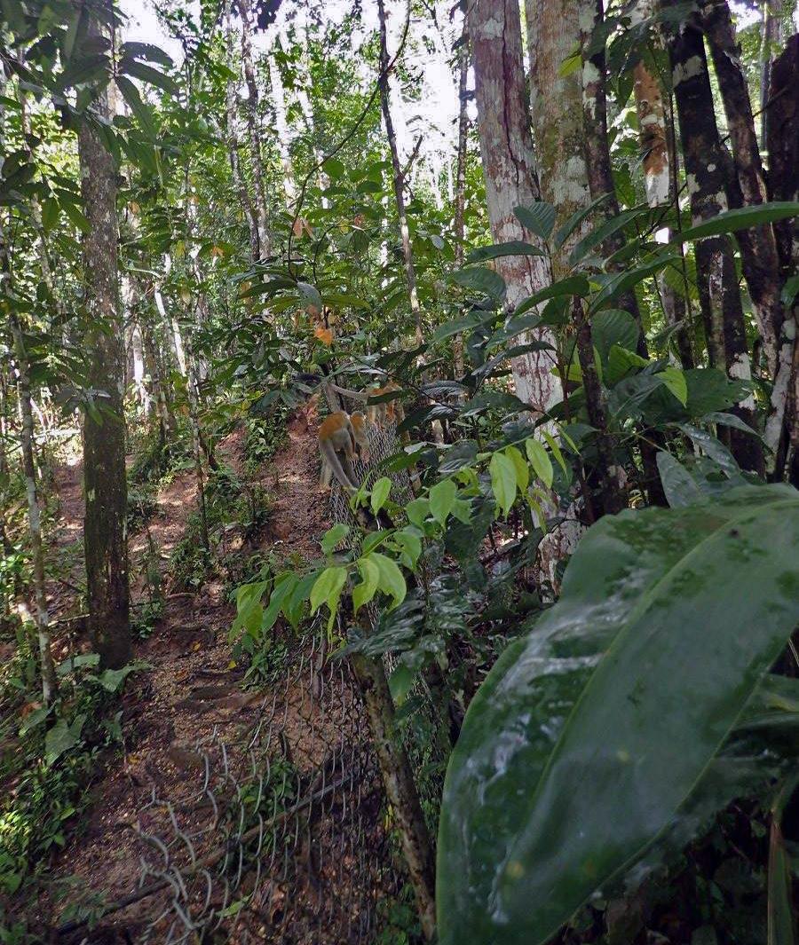 tamed jungle.jpg