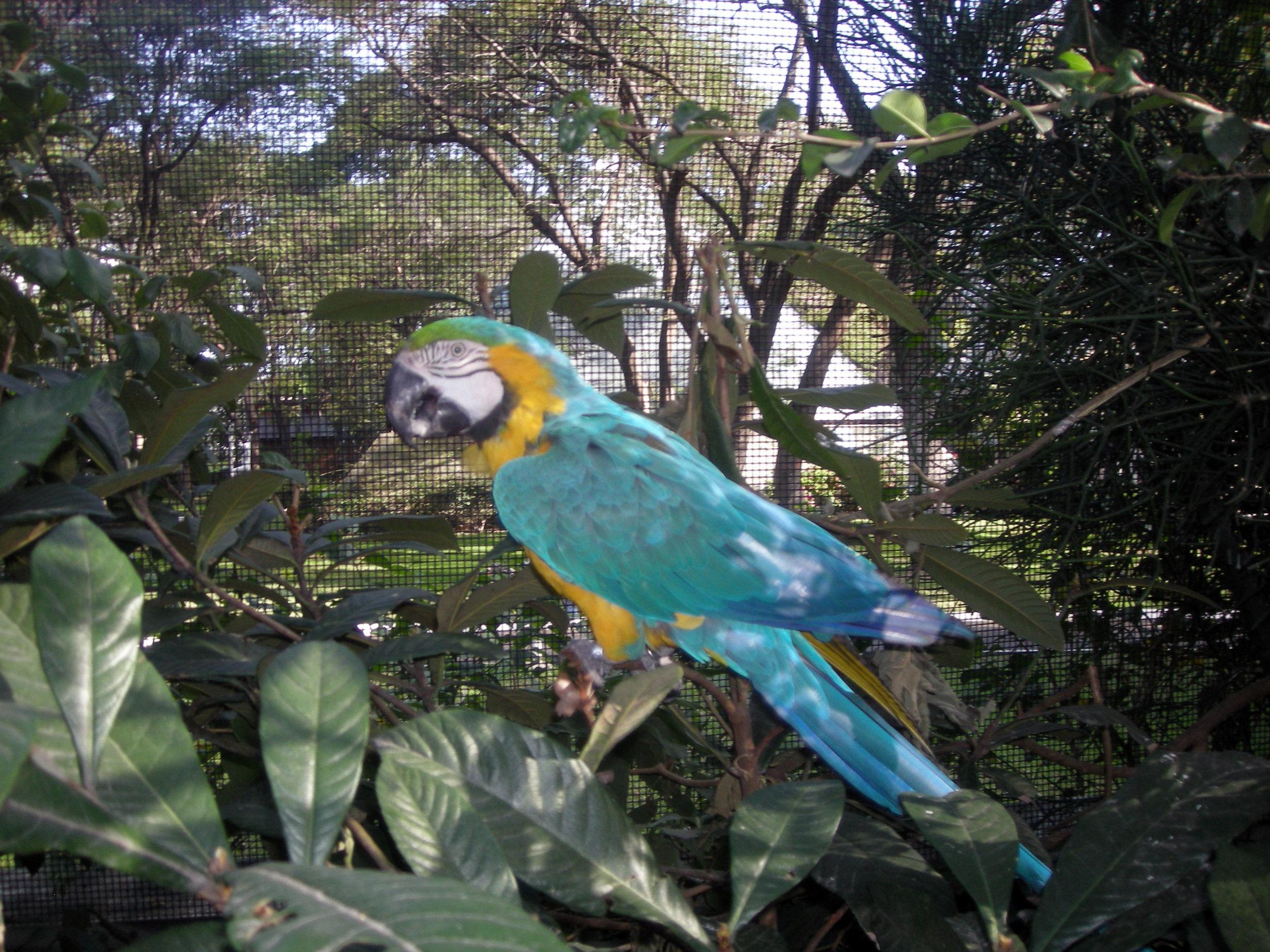 Parque Agua Azul aviarium.jpg