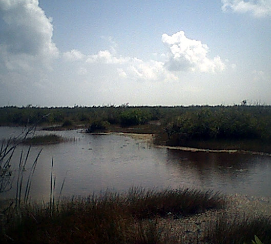puertomorelosswamp.jpg