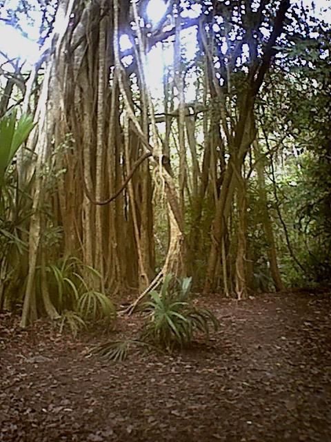 cobaforest.jpg