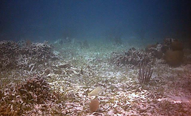 coral graveyard.jpg