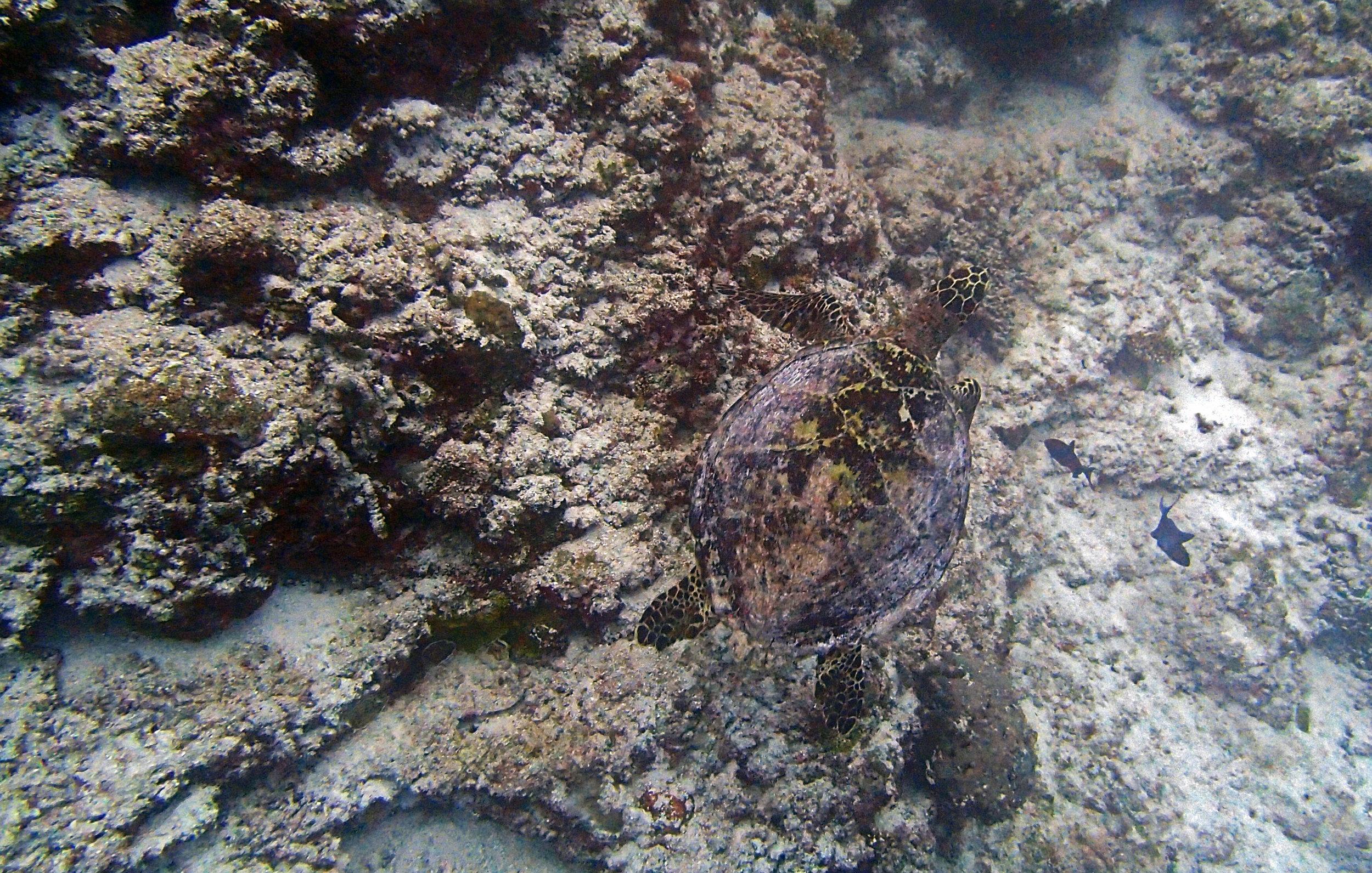 first turtle of trip.jpg