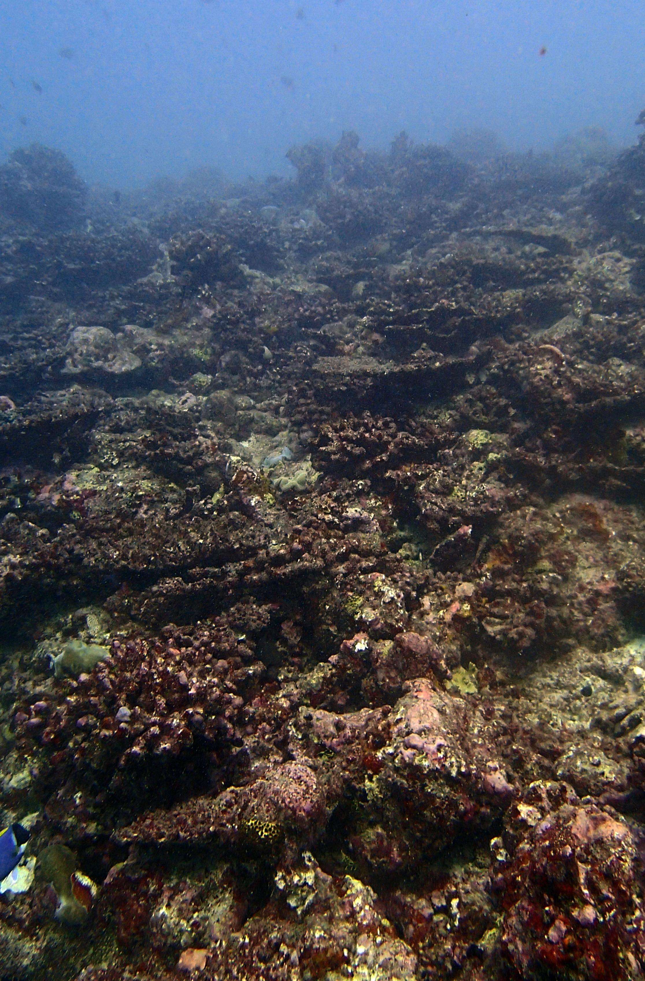CCA-encrusted reef.jpg