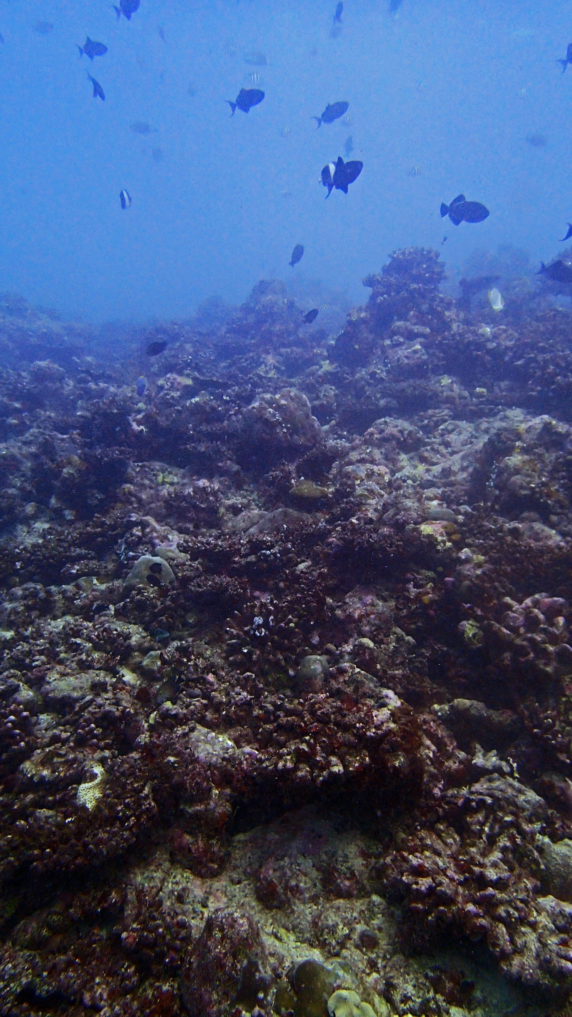 COTS-damaged reef.jpg