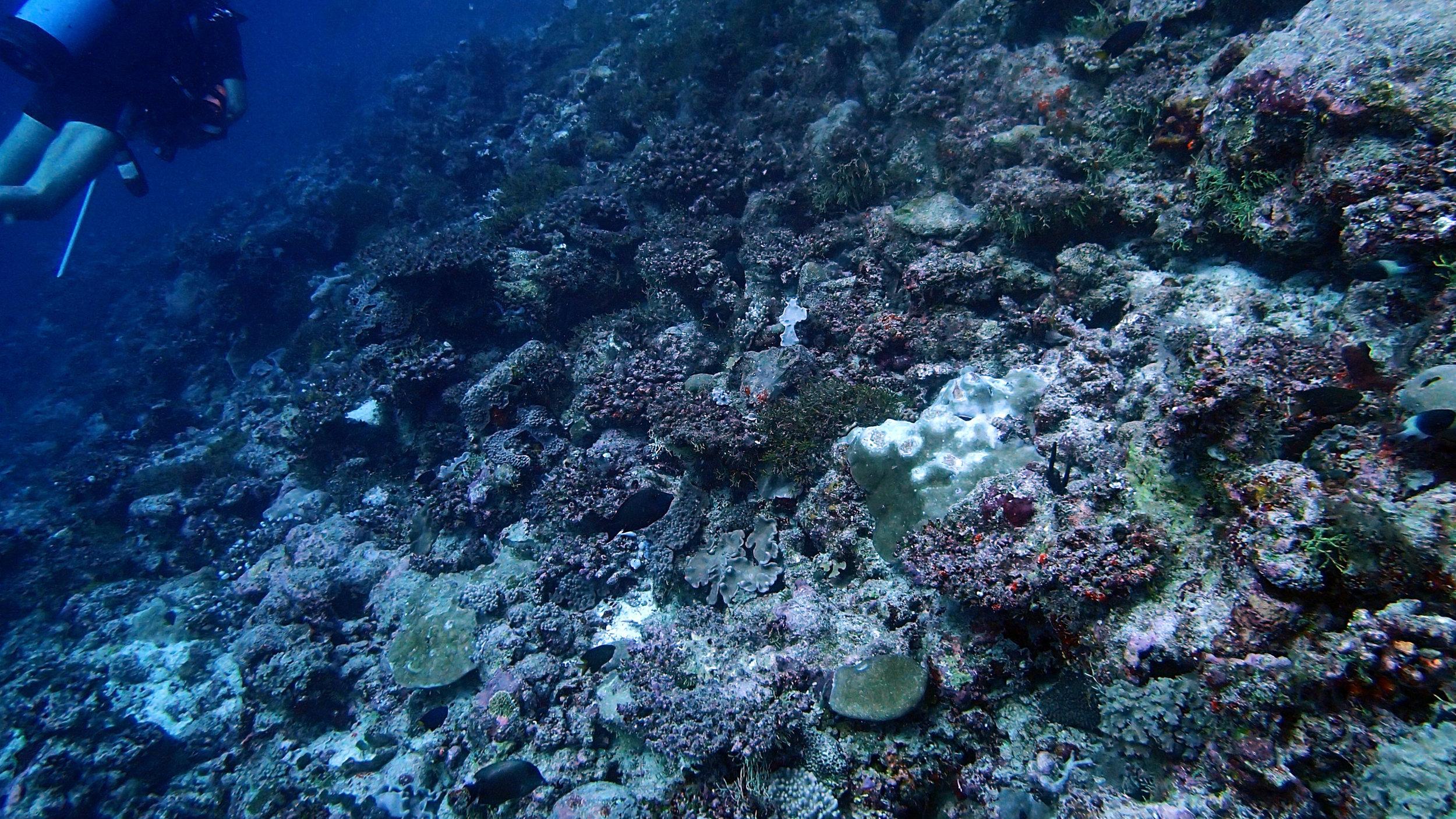 degraded reef.jpg