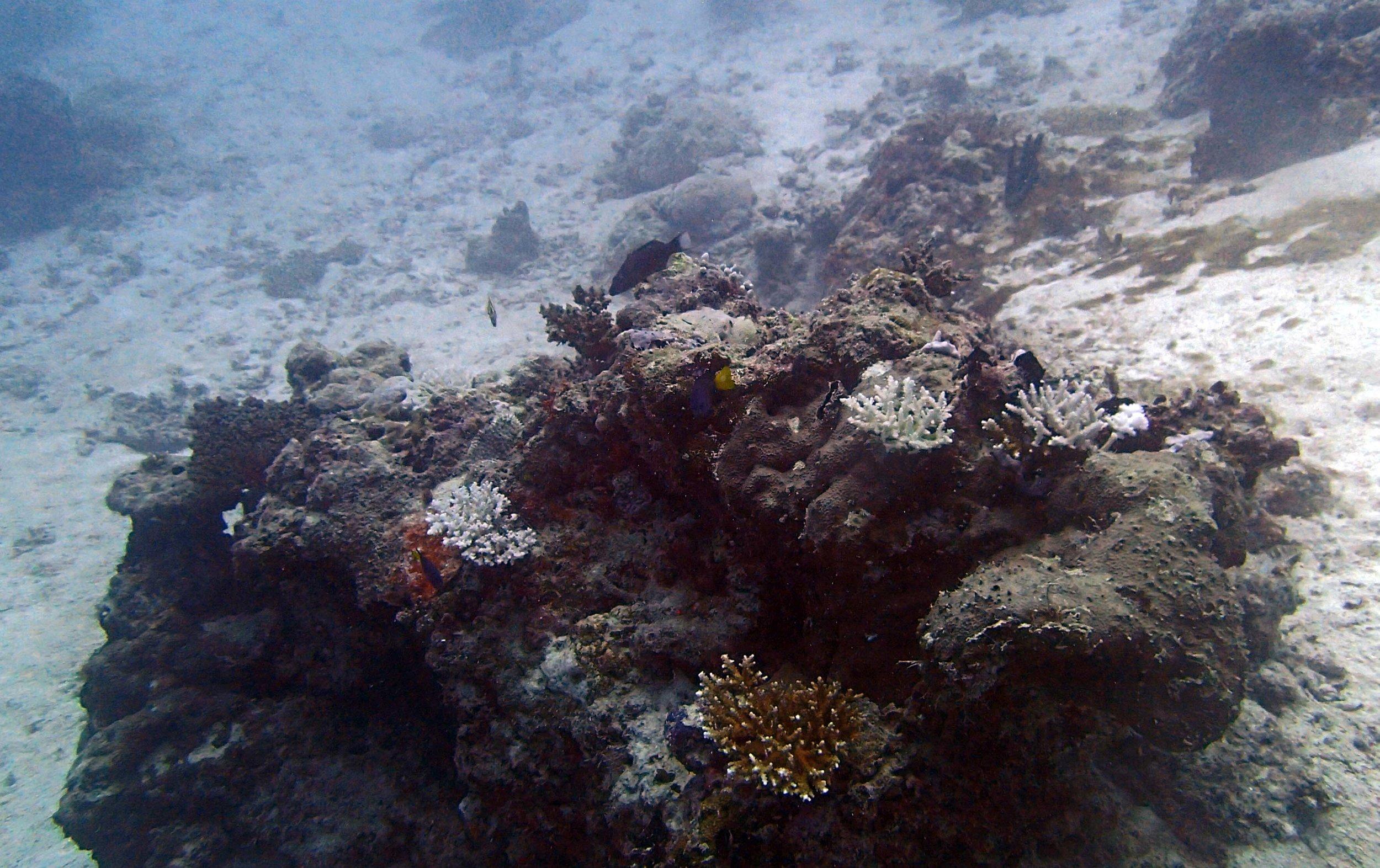 eaten corals.jpg