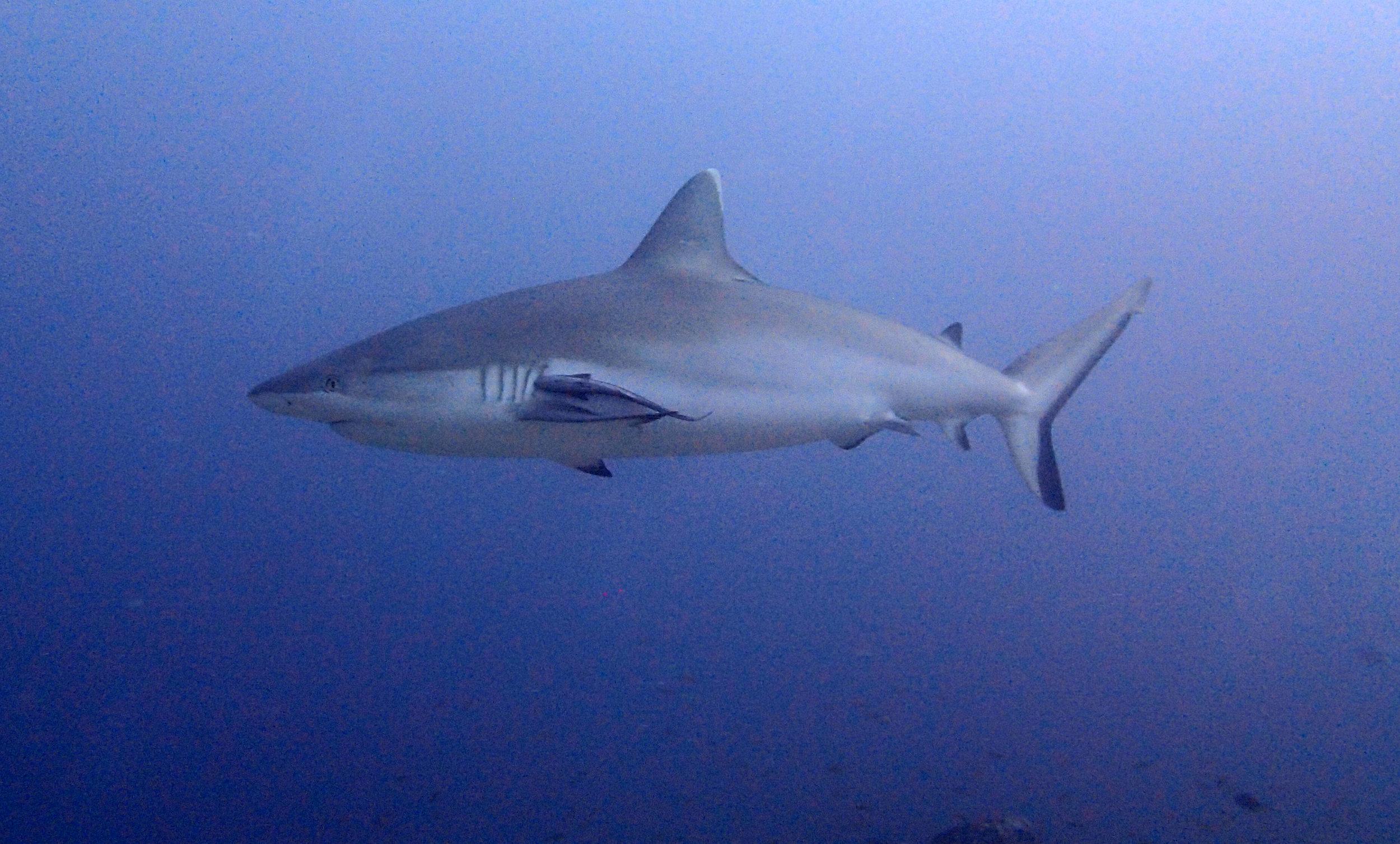 decent shark shot.jpg