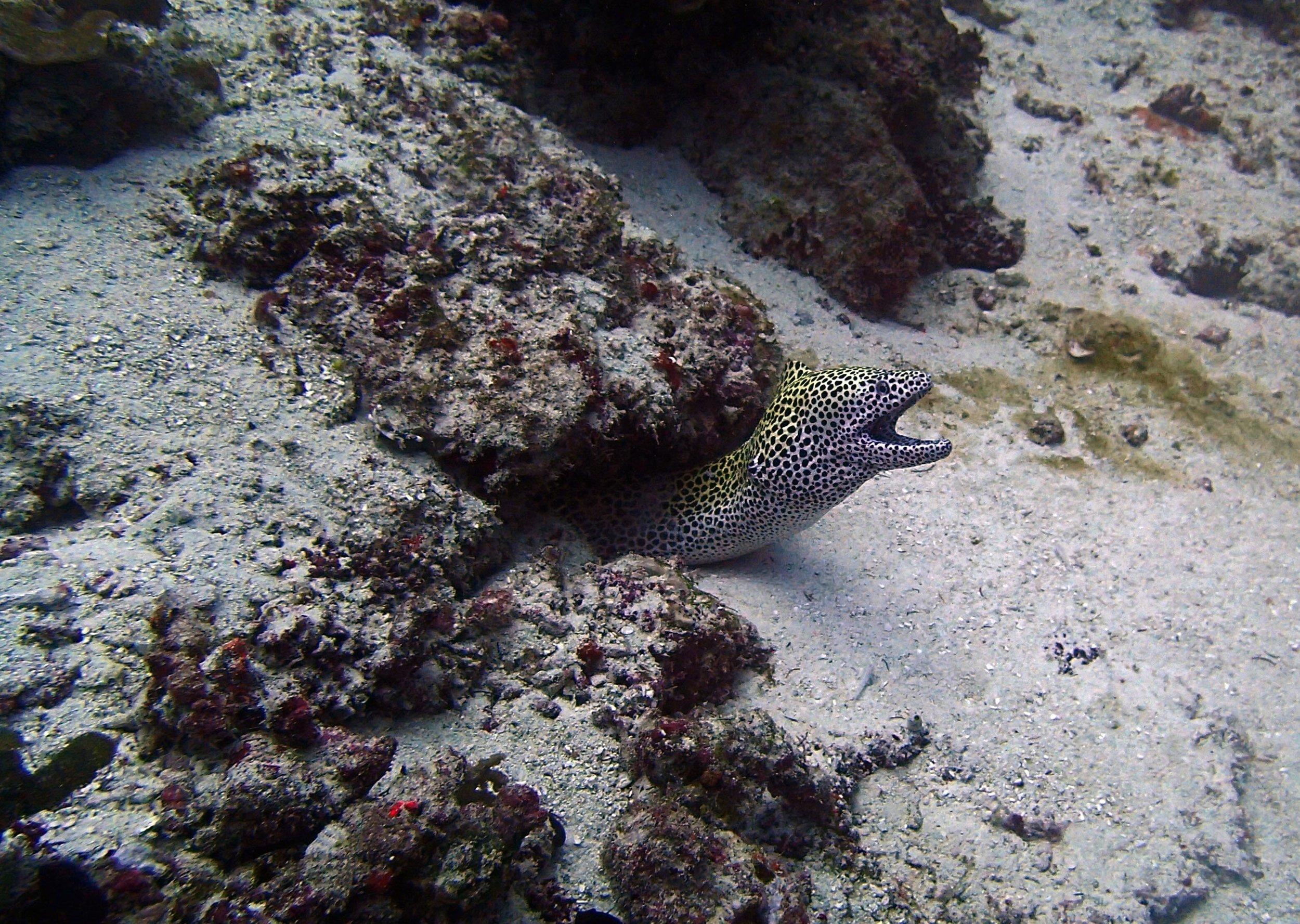 honeycomb eel.jpg