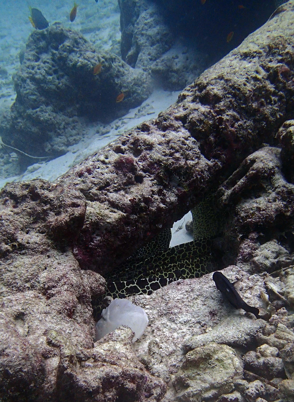 hiding honeycomb eels.jpg