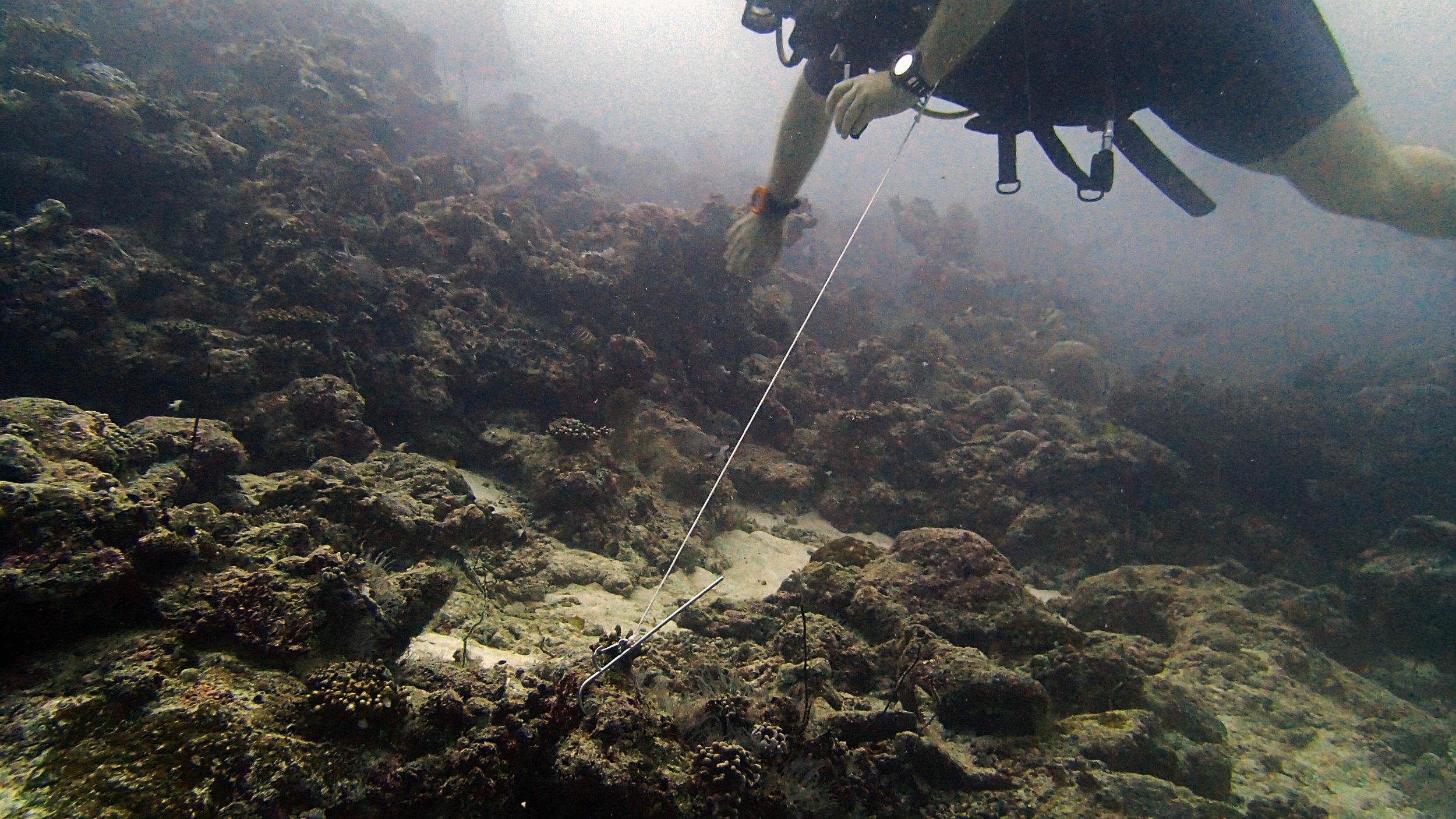 reef hook.jpg