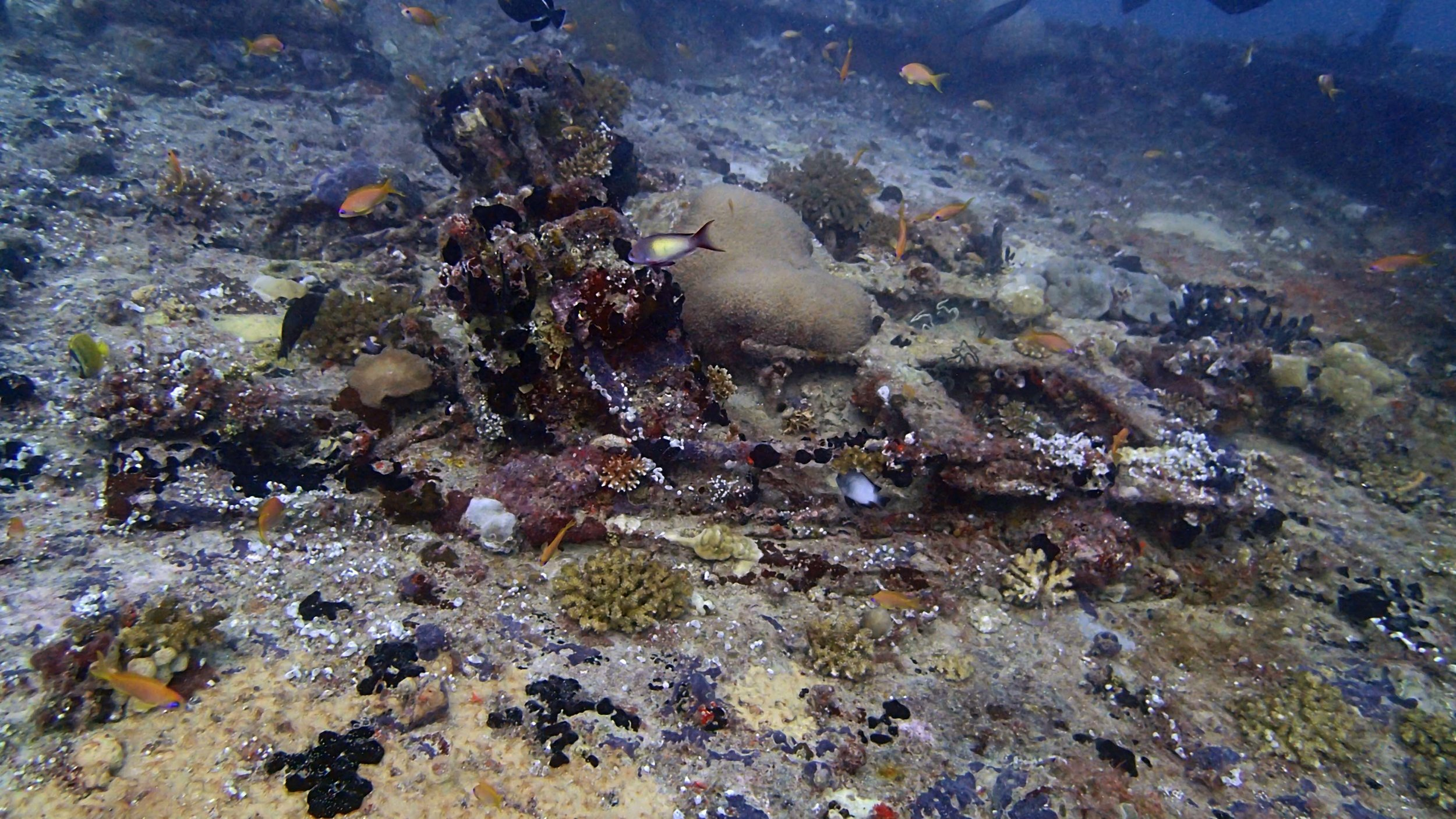 corals on wreck.jpg