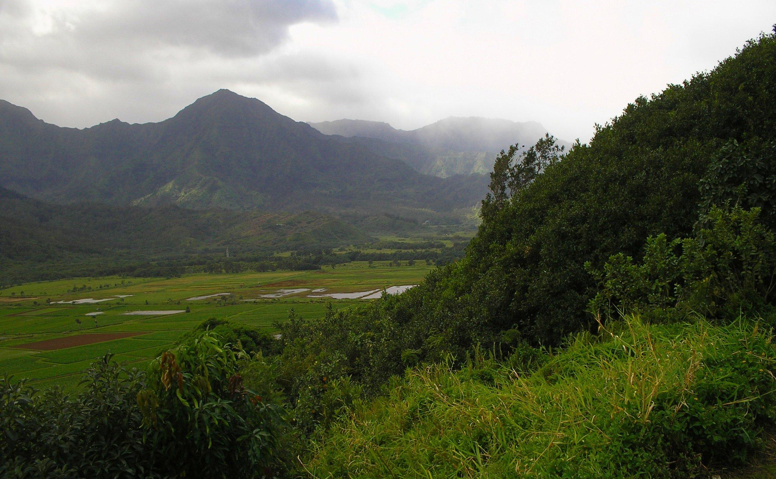 hanalei taro fields.JPG