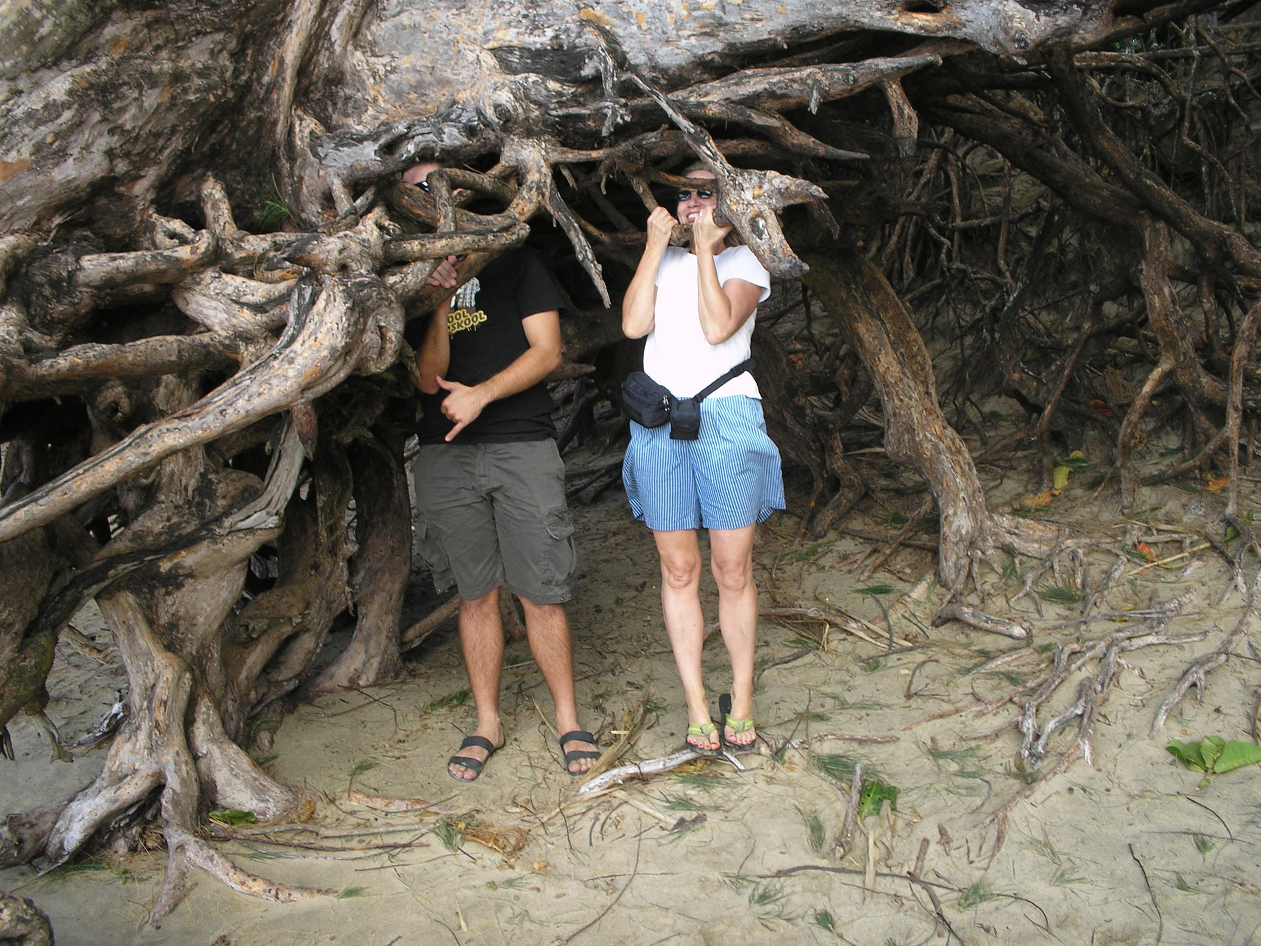 hiding in tree roots kee beach.jpg