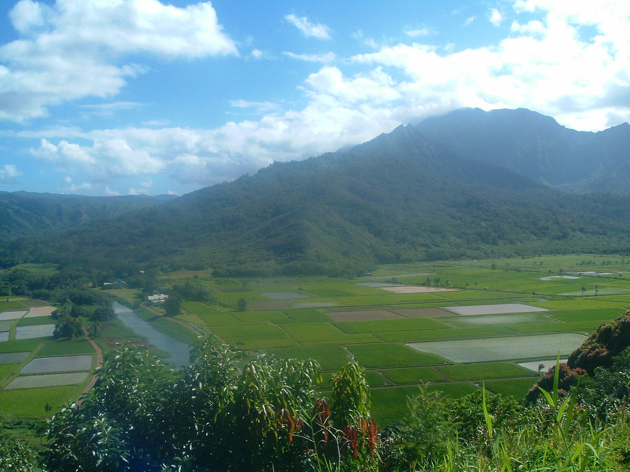 taro fields.JPG
