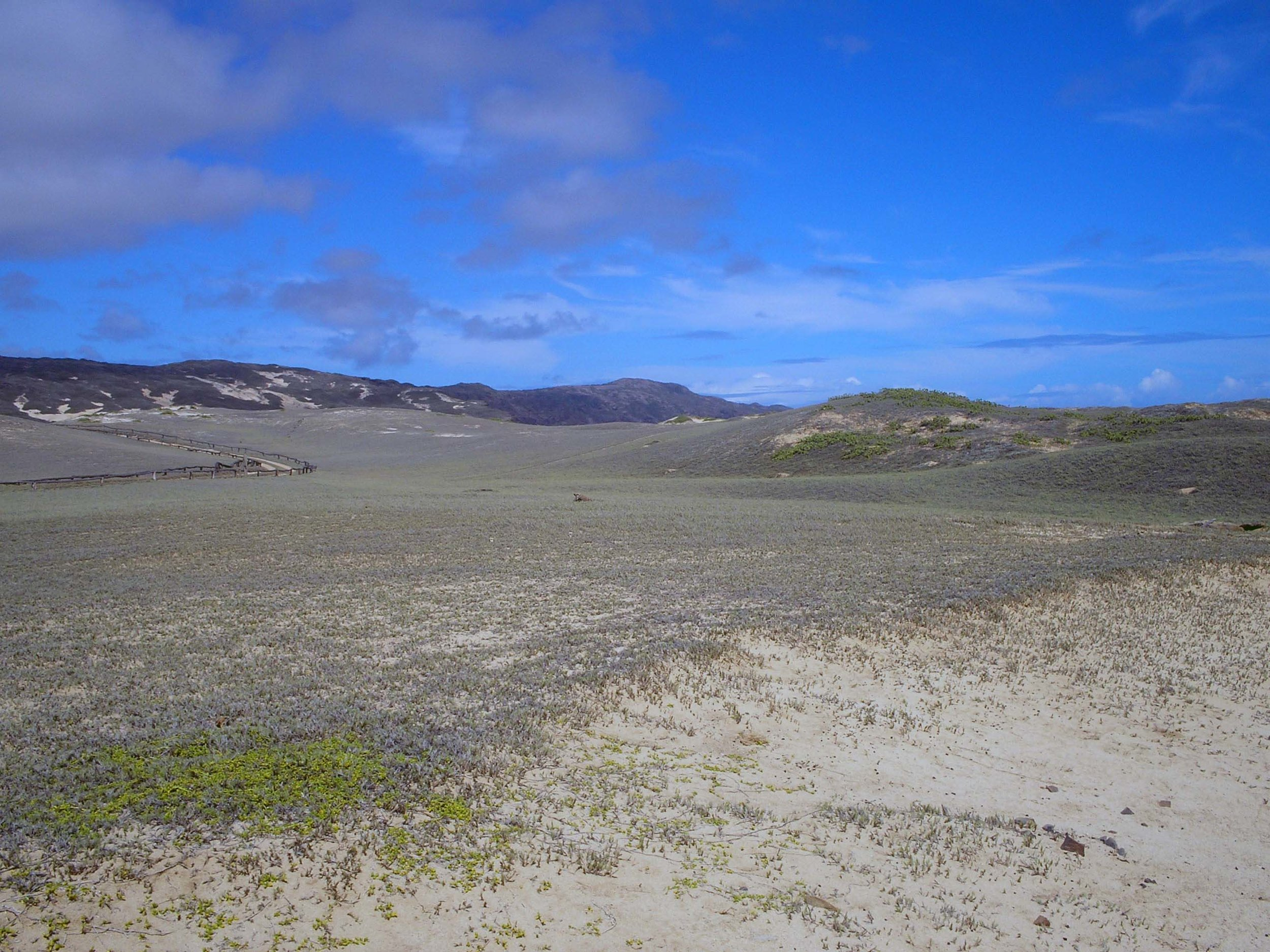 moomomi dunes 2.jpg