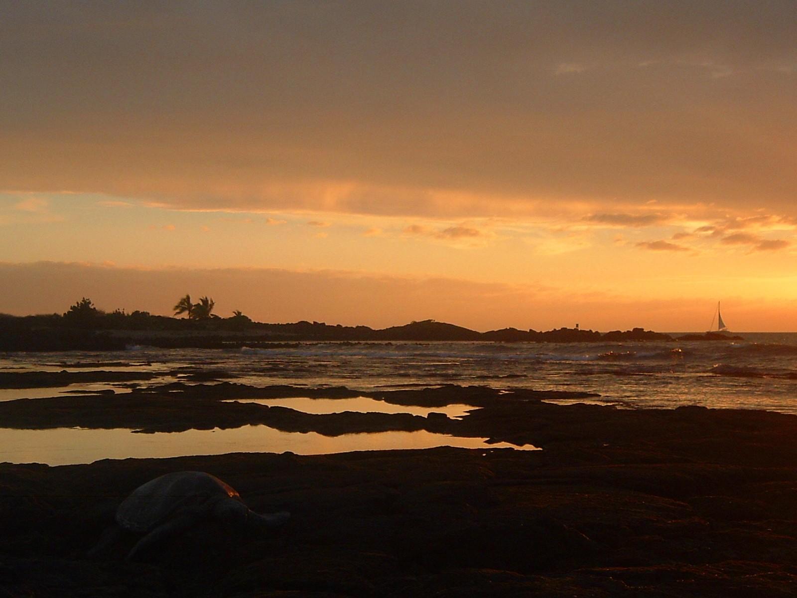 turtle at sunset honokohau beach park.JPG