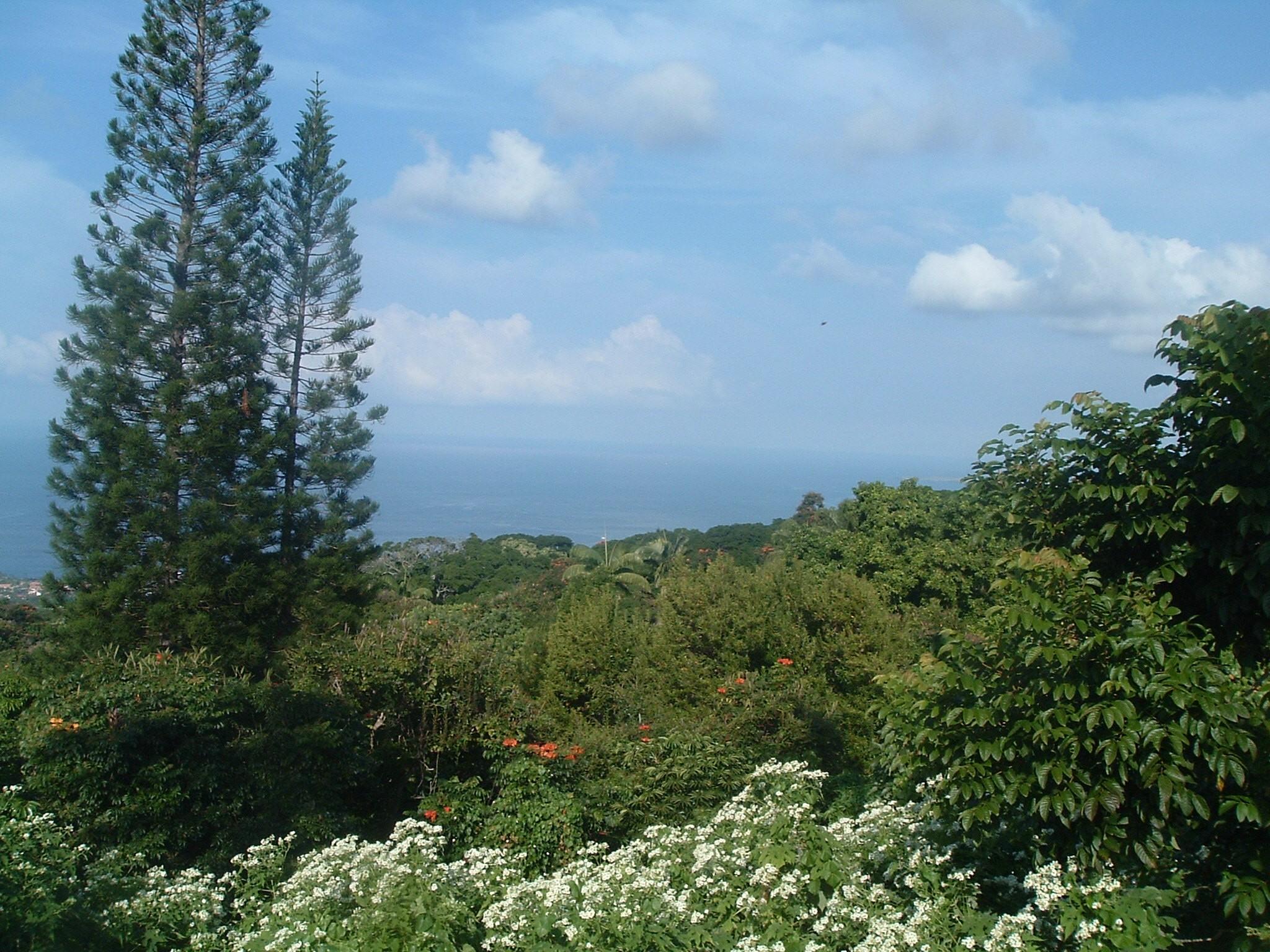 view from mamalahoa highway.JPG