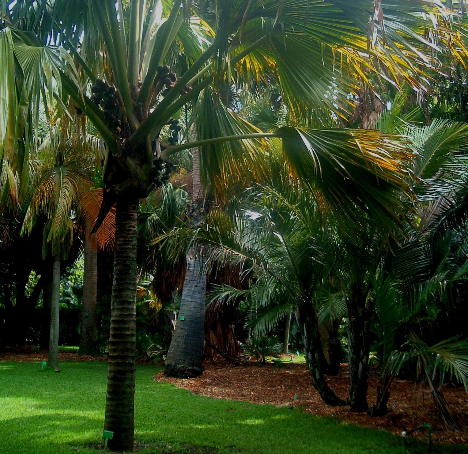 foster botanical garden palms 1-31-05.JPG