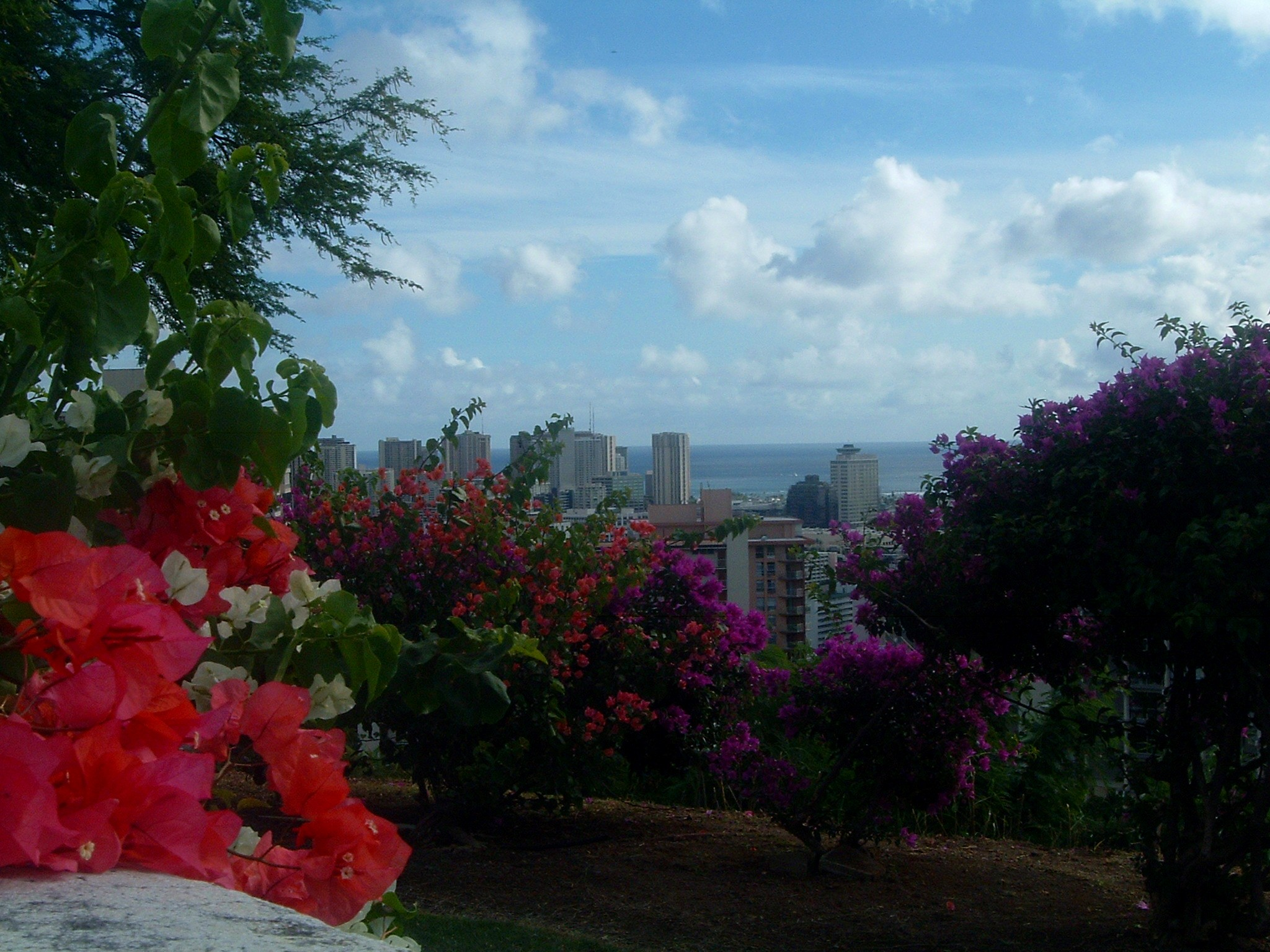 flowers and honolulu from punchbowl.JPG