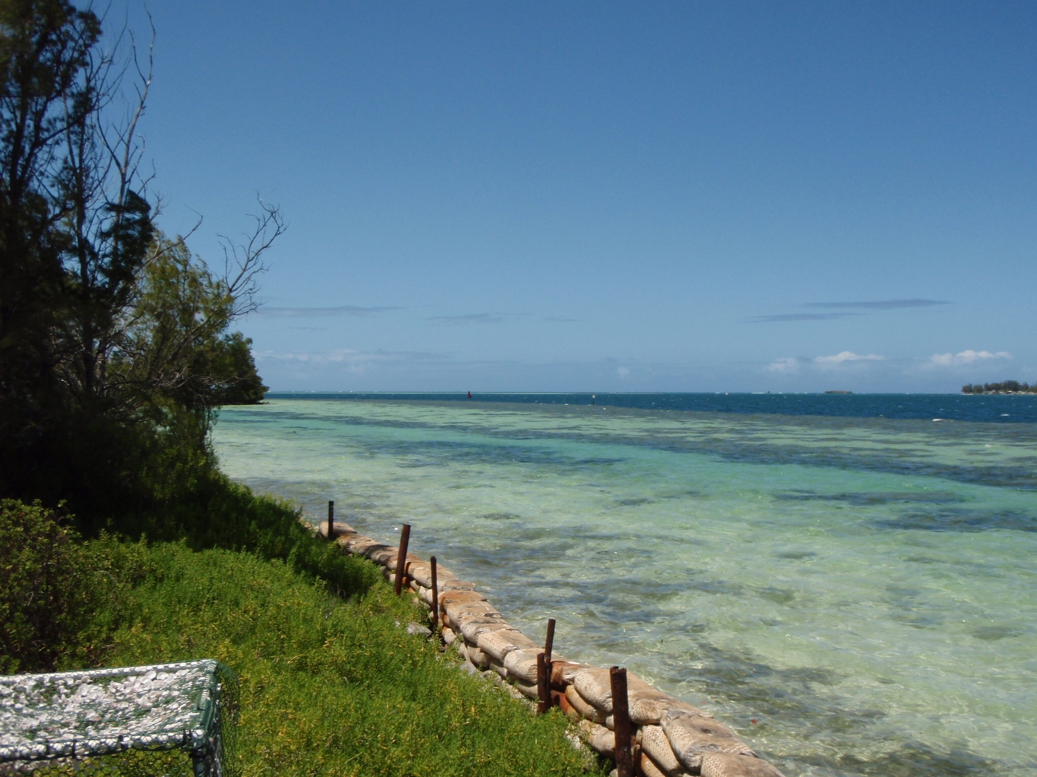 coconut island fringing reefs.jpg