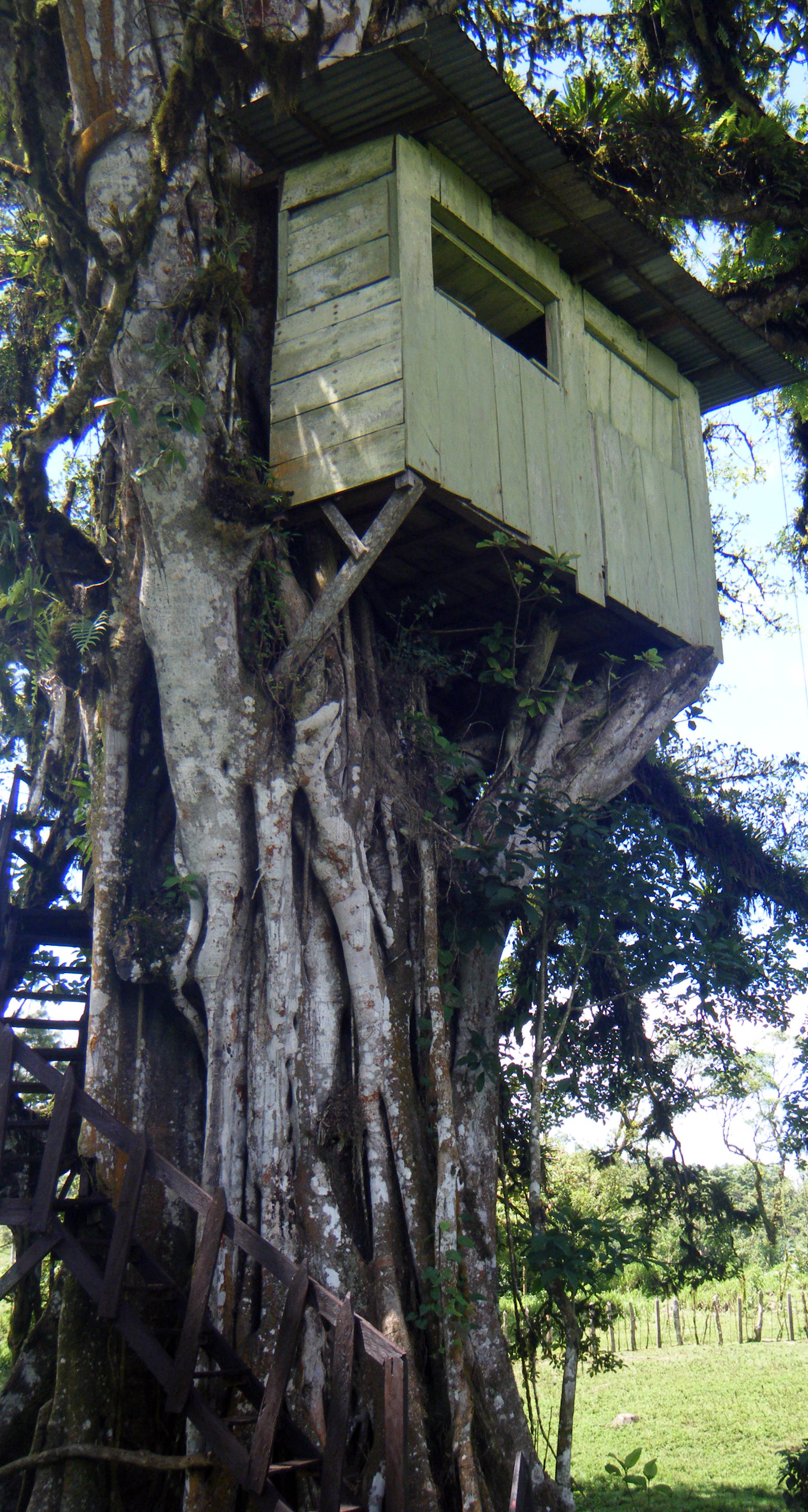 treehouse at Posada La Sonada.jpg