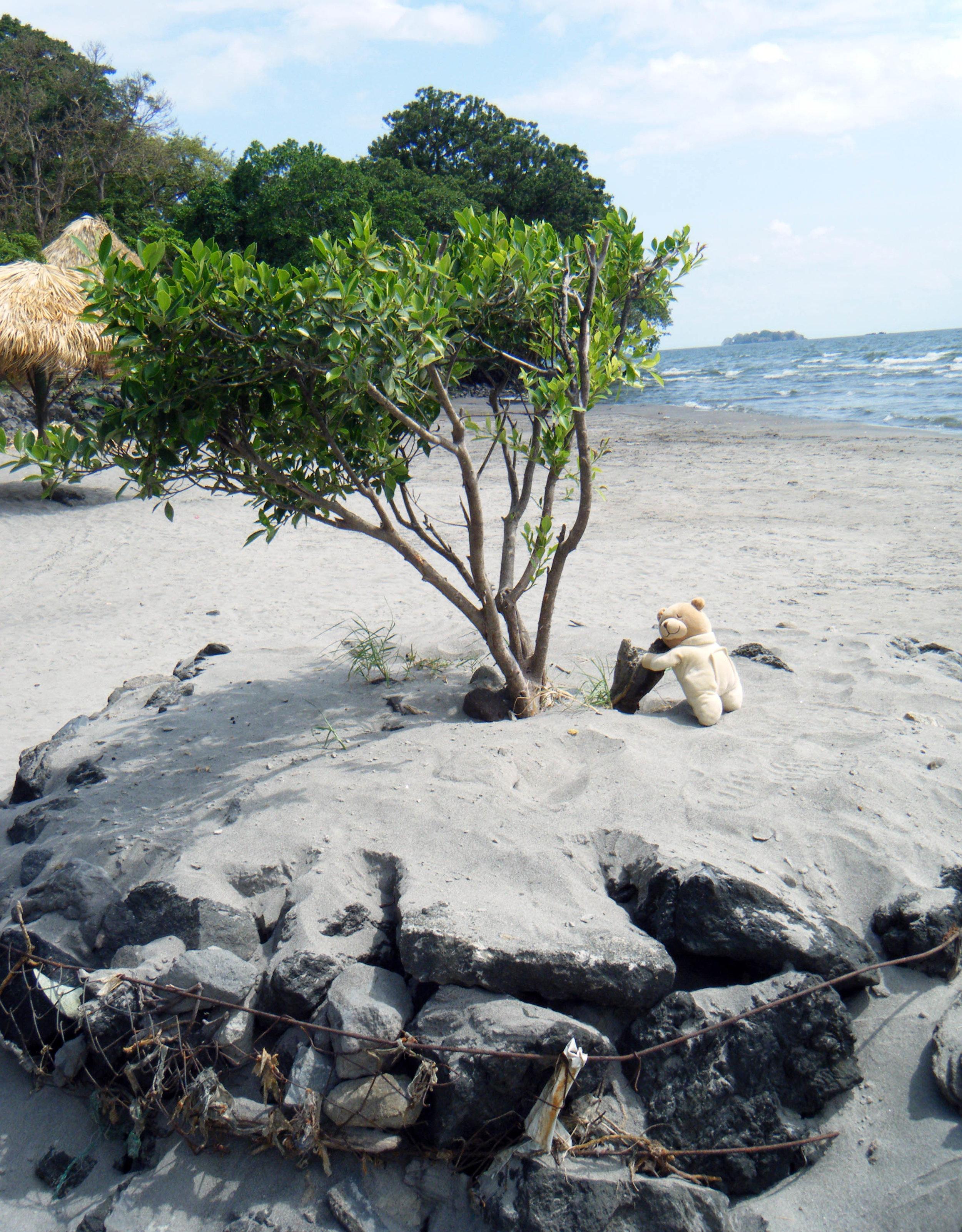 SBJ's island.jpg