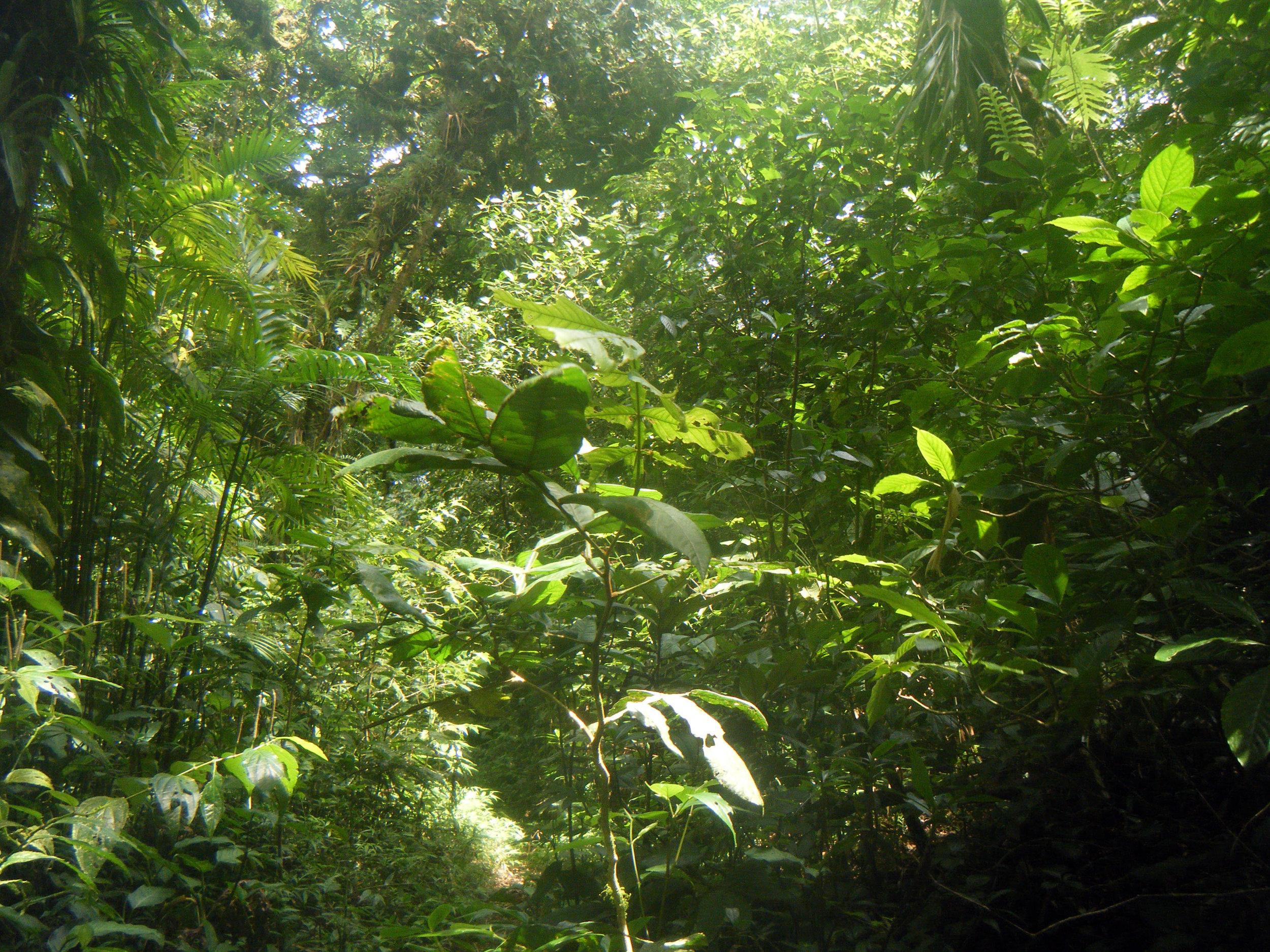 la selva.jpg