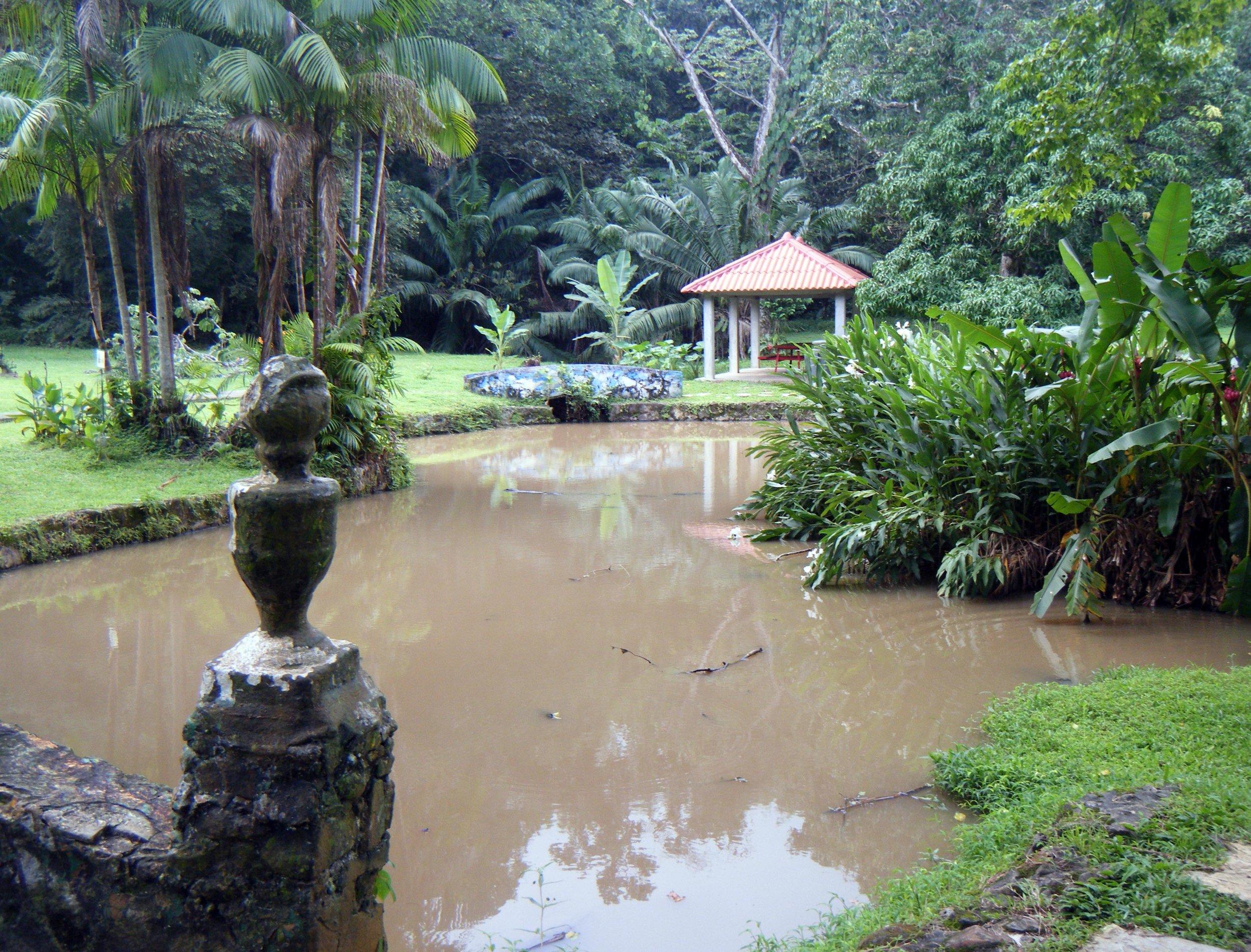 turtle pond.jpg