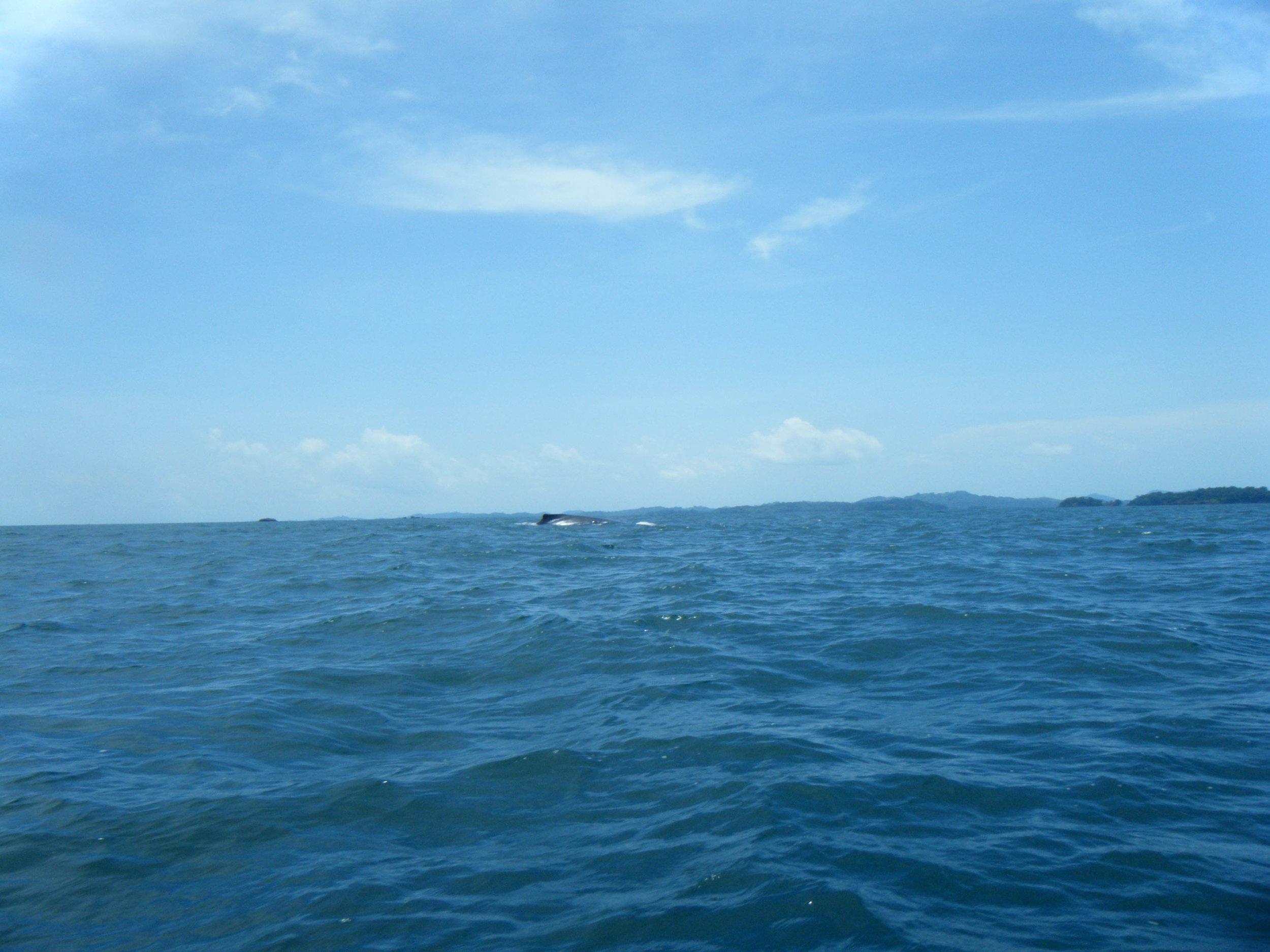 whale 7-17-12.jpg