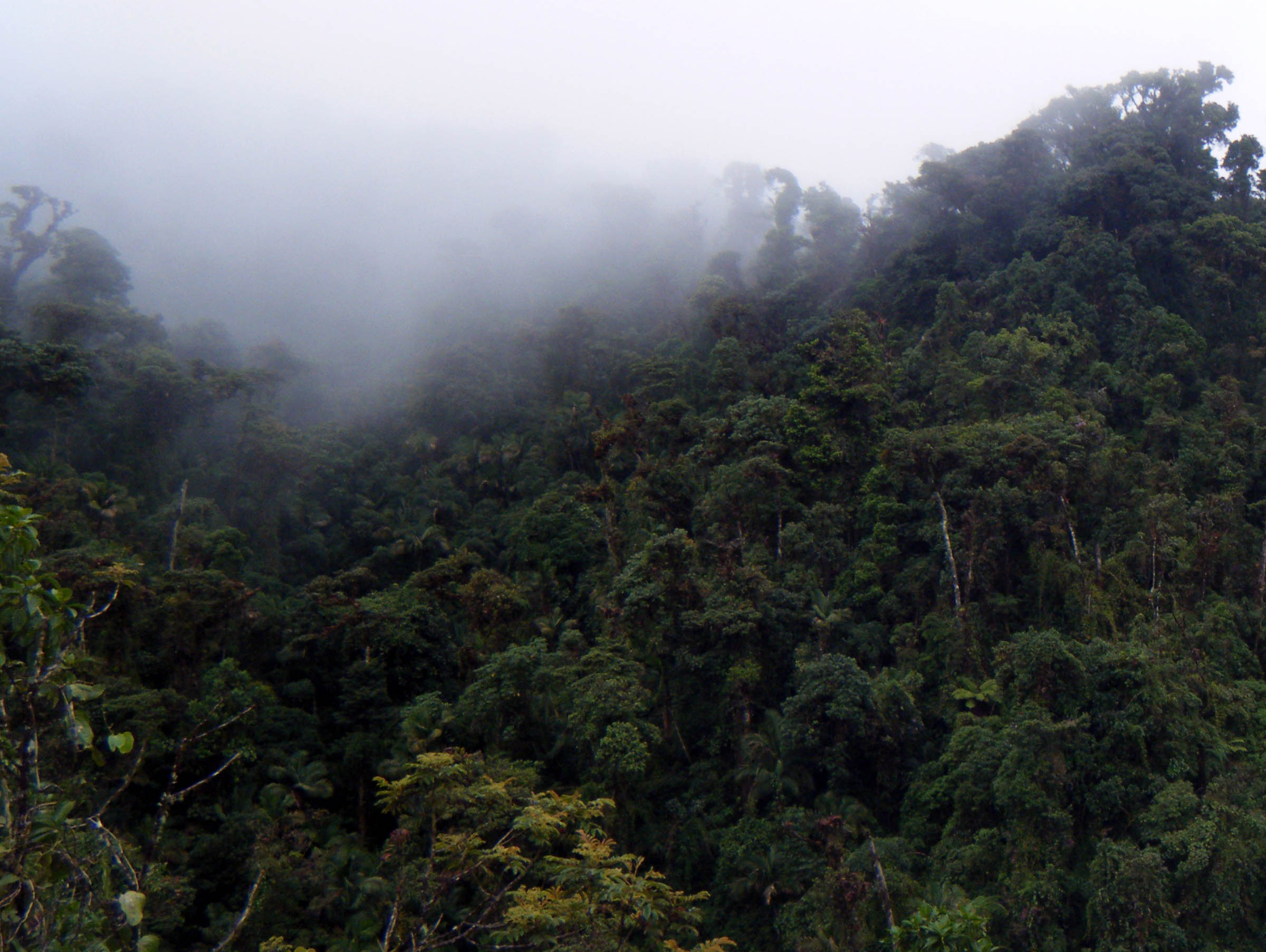 cloud forest.jpg
