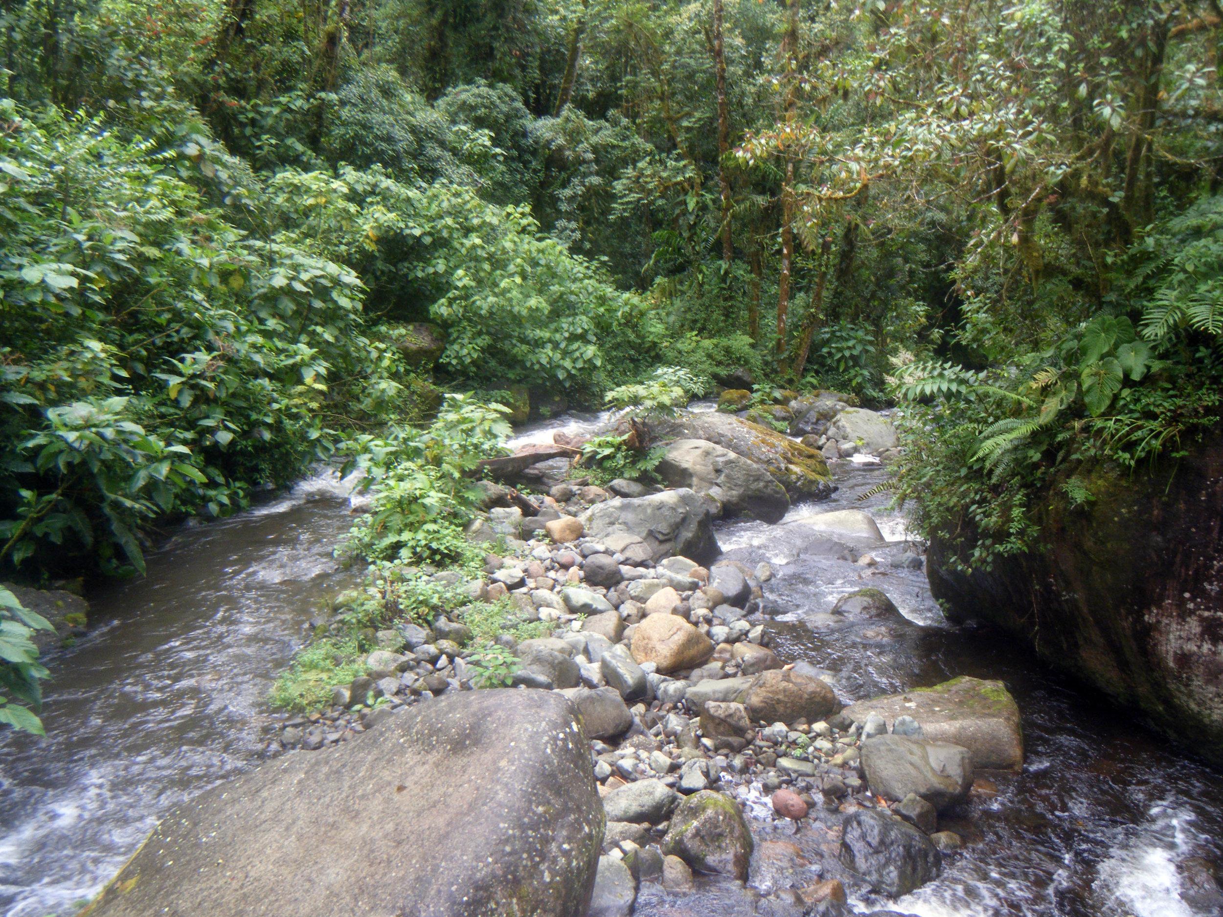 Quetzales trail 7-20-12.jpg