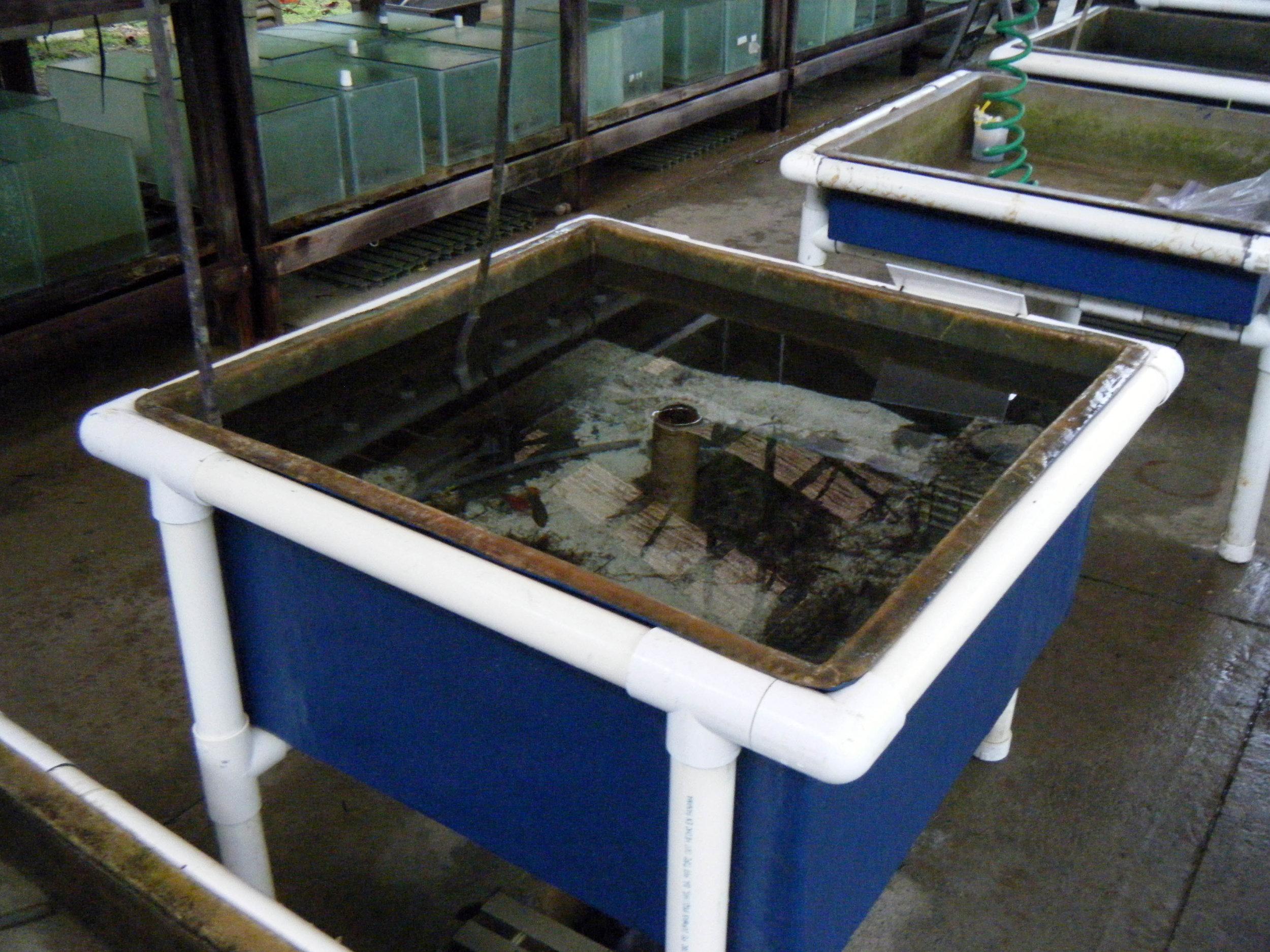 seawater aquarium.jpg