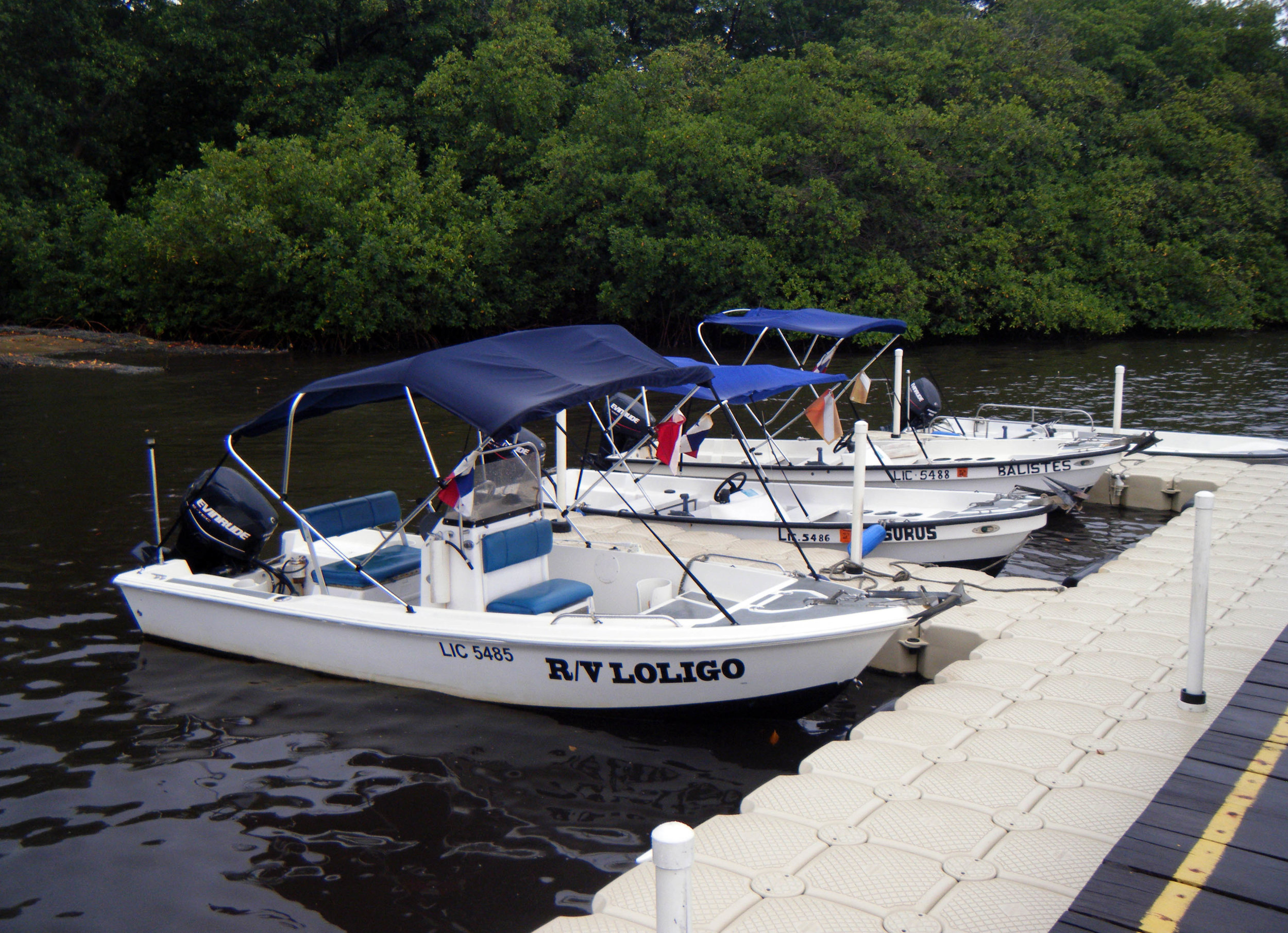 STRI Bocas 7-24-12.jpg