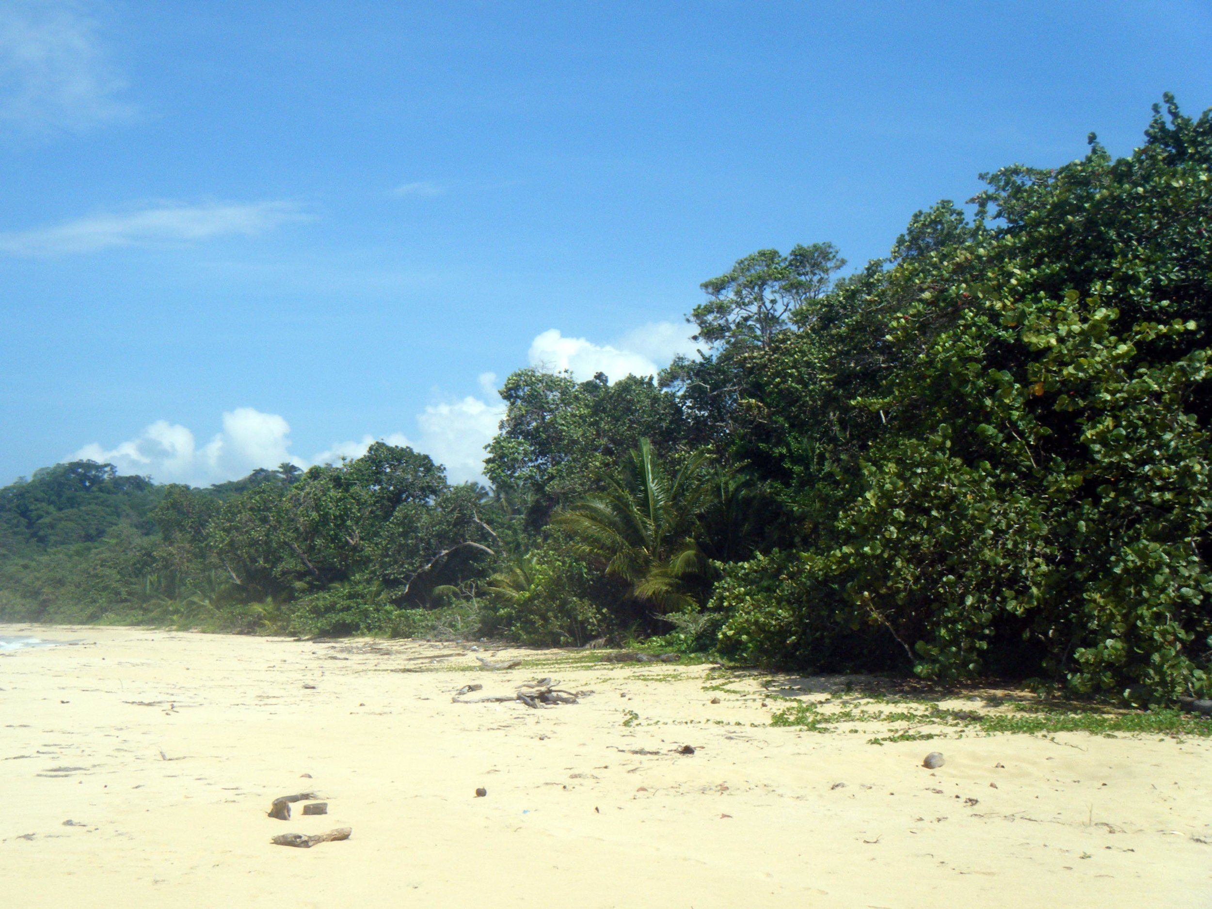 jungle beach.jpg