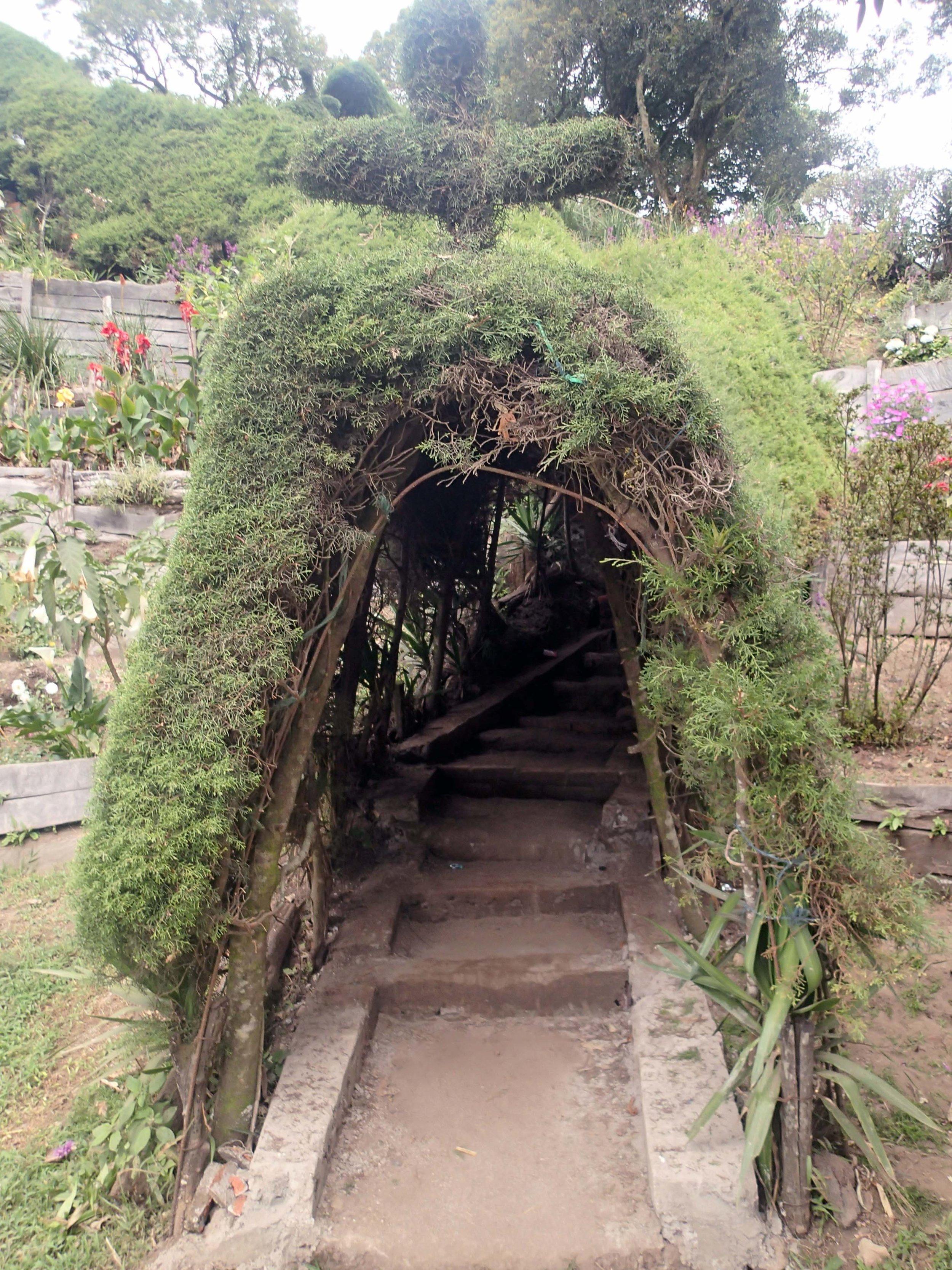 topiary tunnel.jpg
