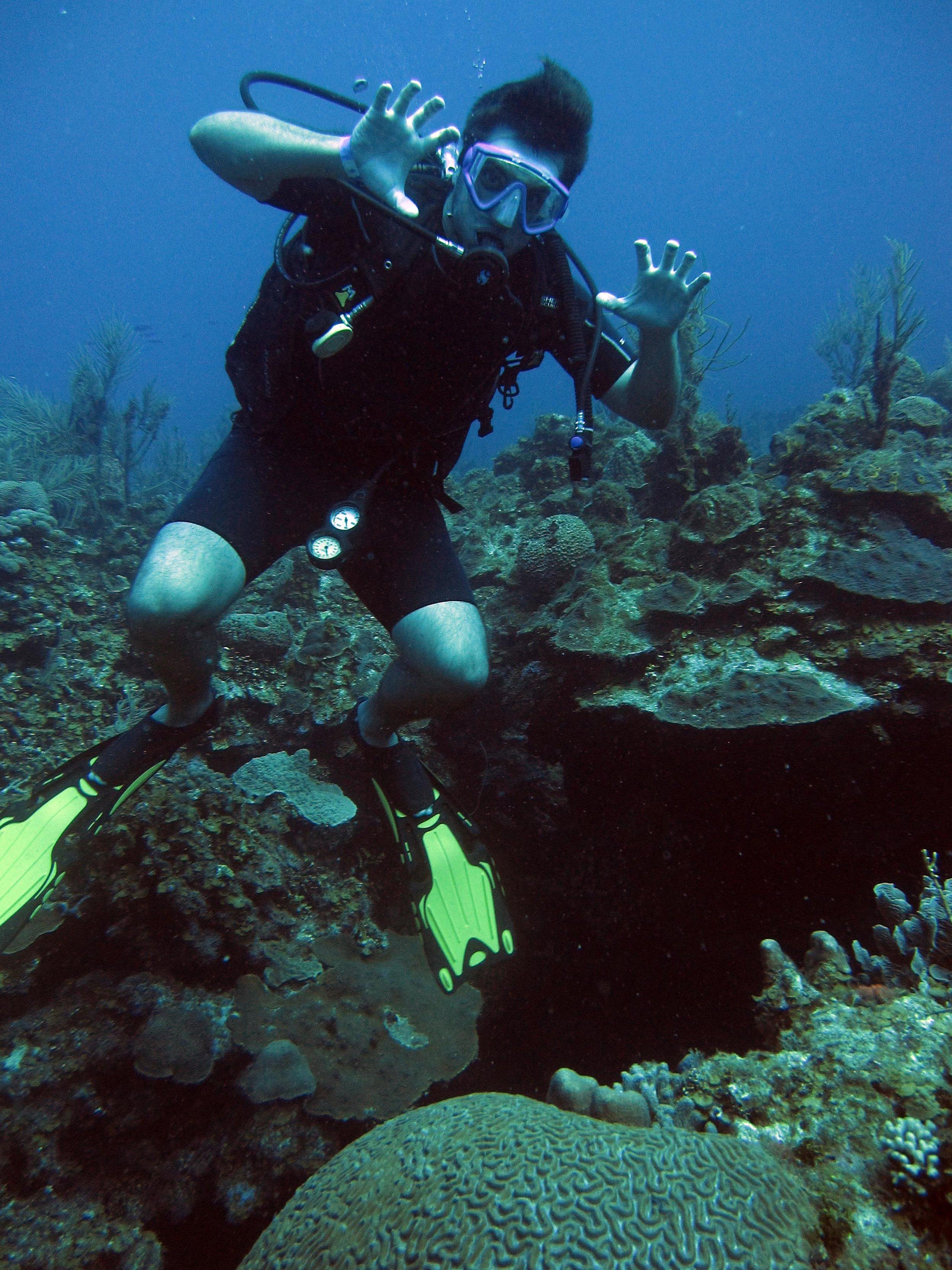 underwater bear.jpg