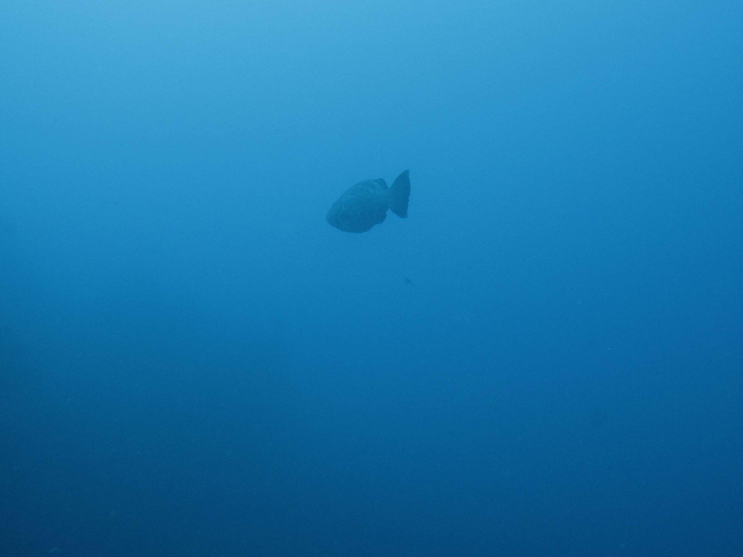 lonely fish.jpg