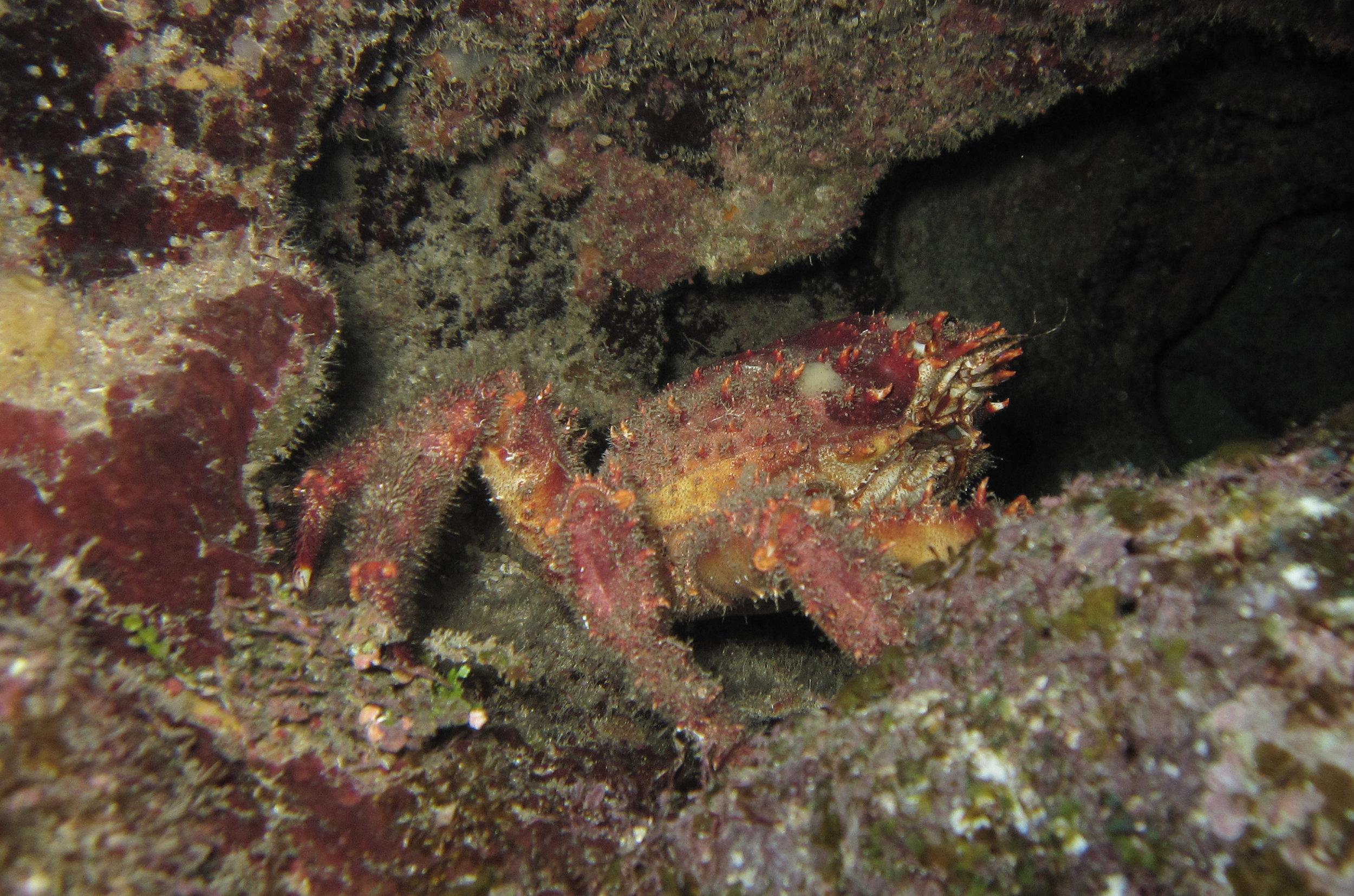 awesome crab macro.jpg