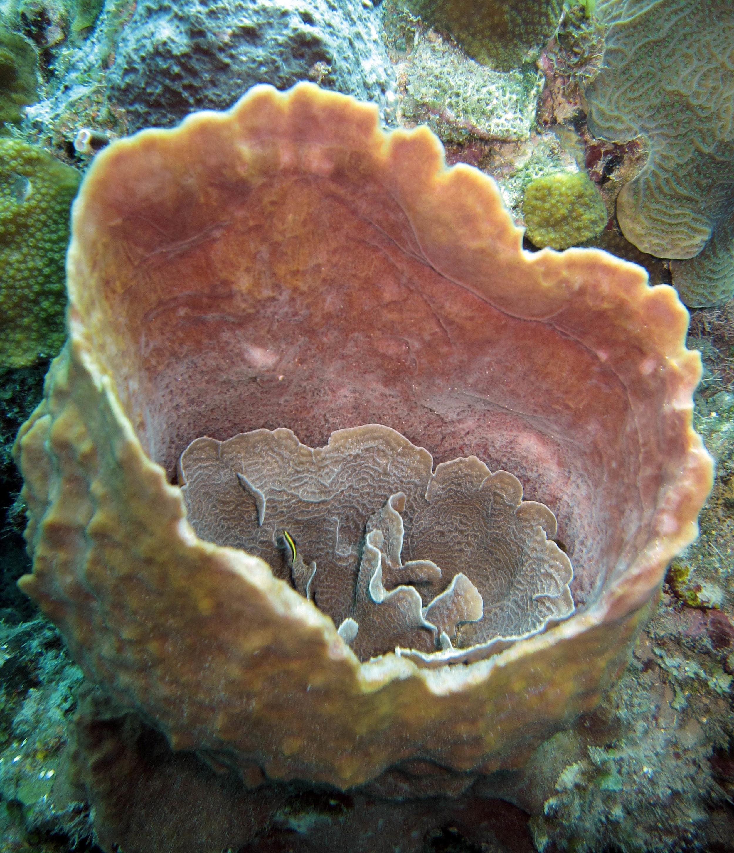 sponge 6.jpg