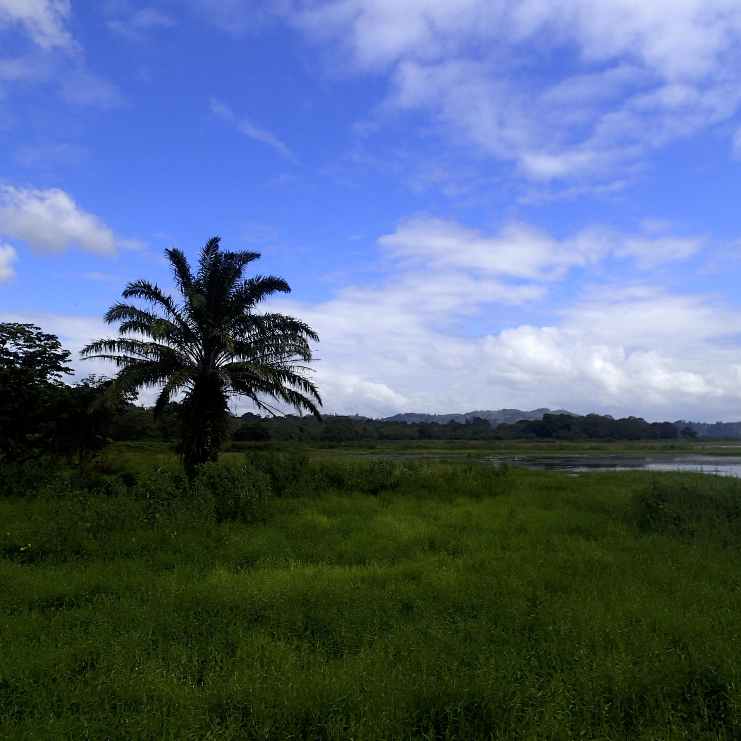 marsh near Lago de Yojoa.jpg