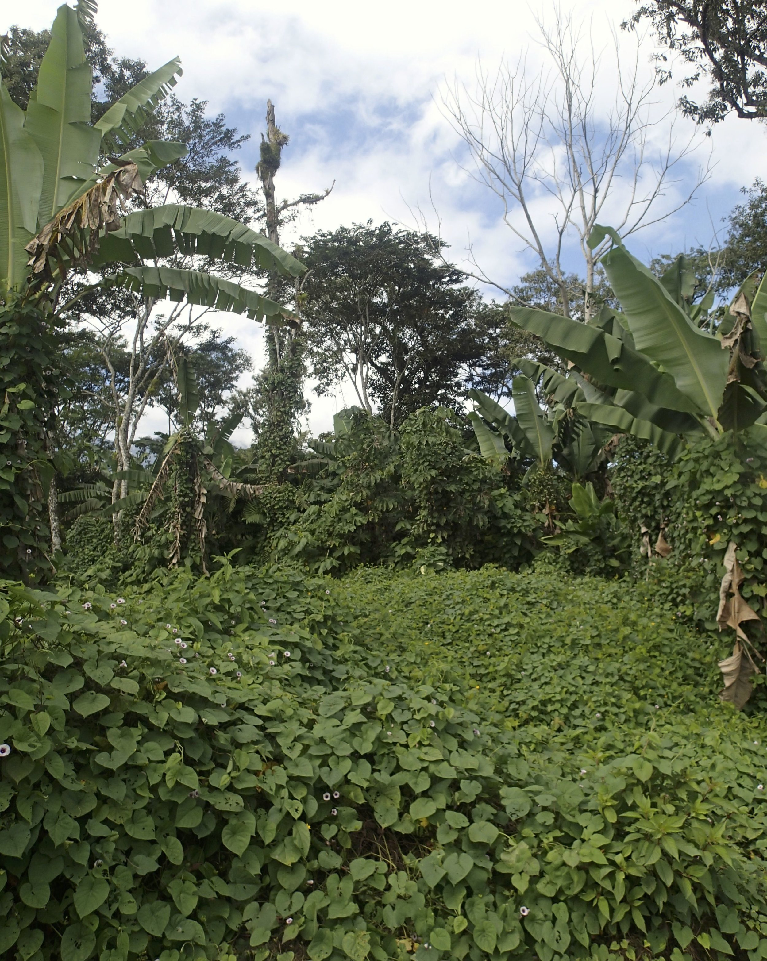 lush foliage at Los Naranjos.jpg