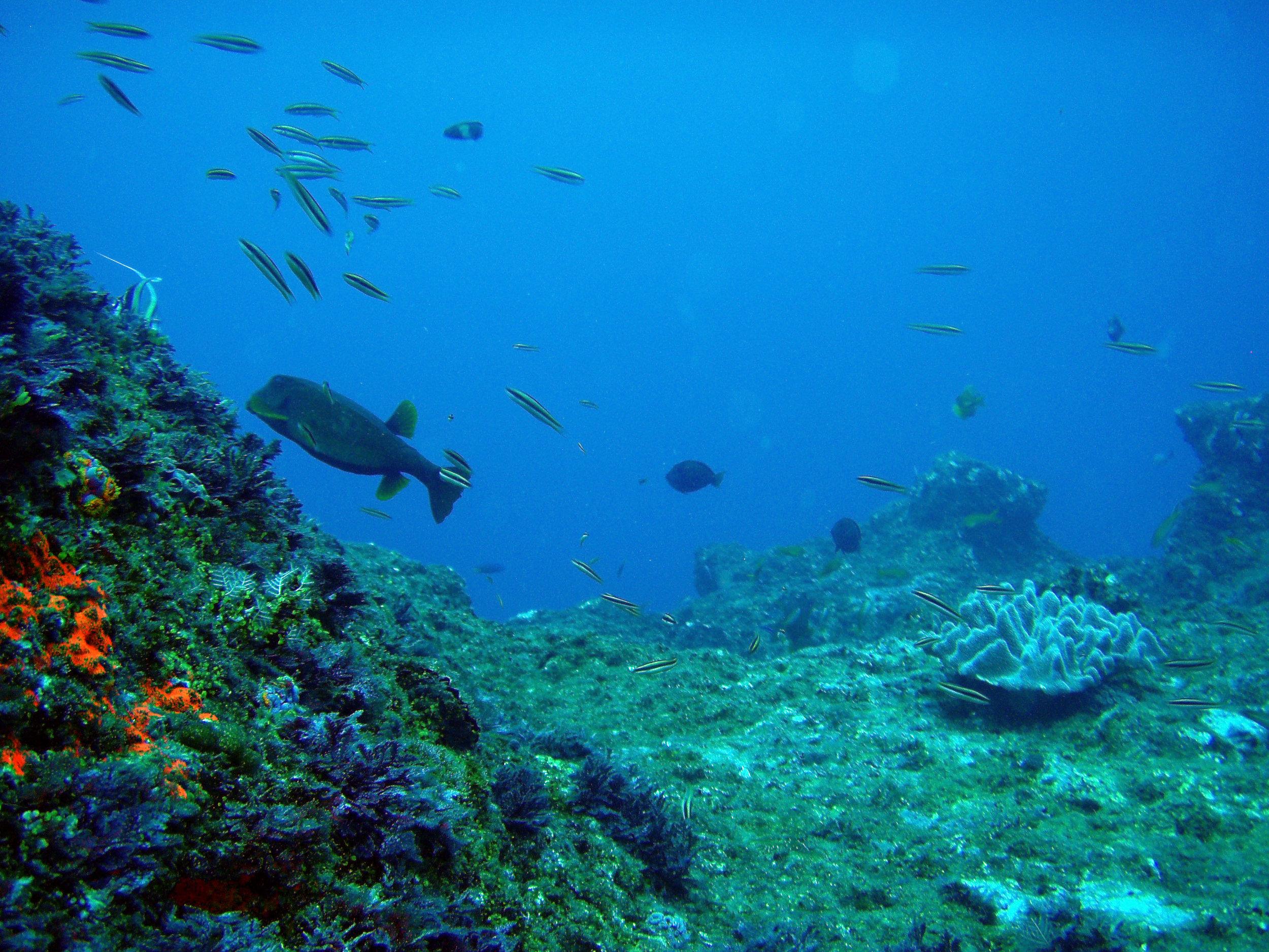 algal reef.jpg