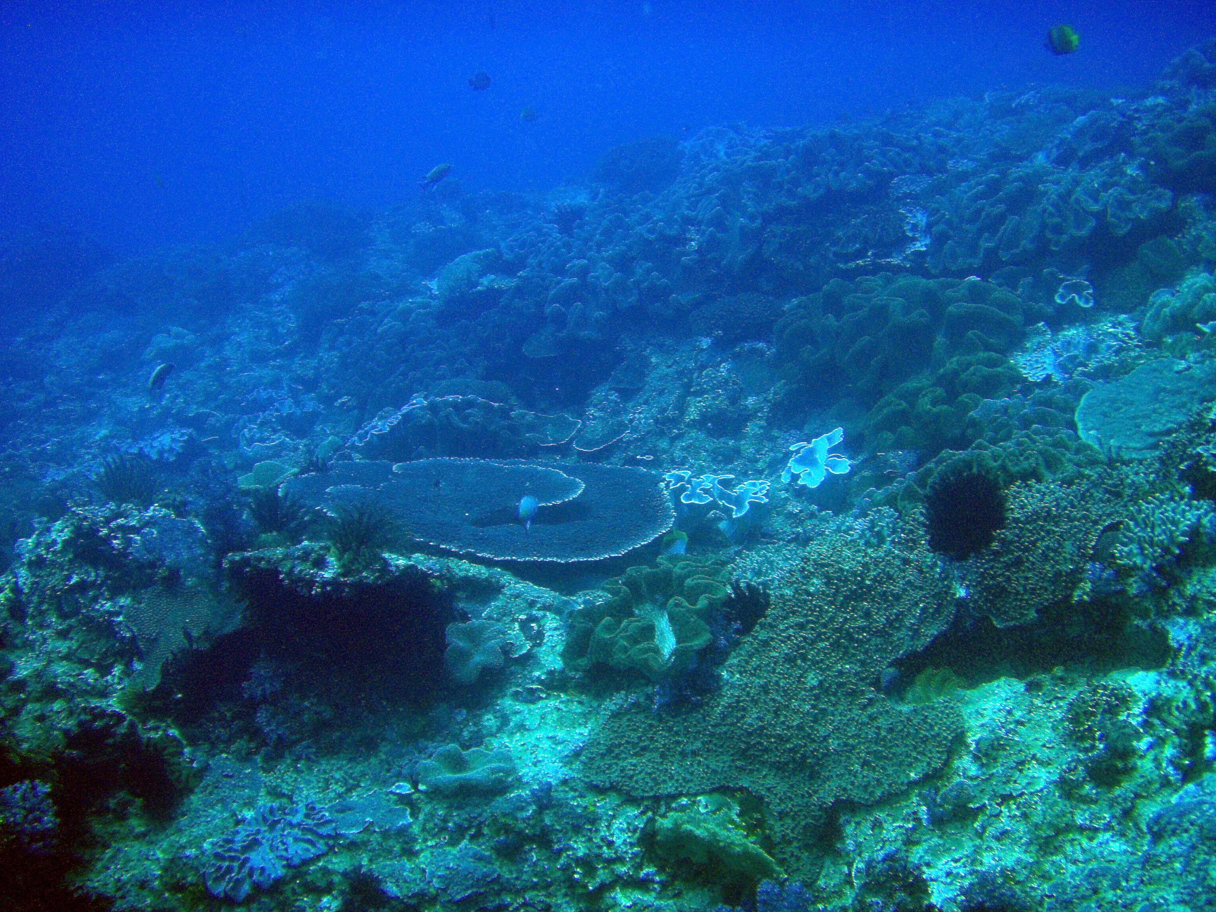 nanwan bay diving.jpg